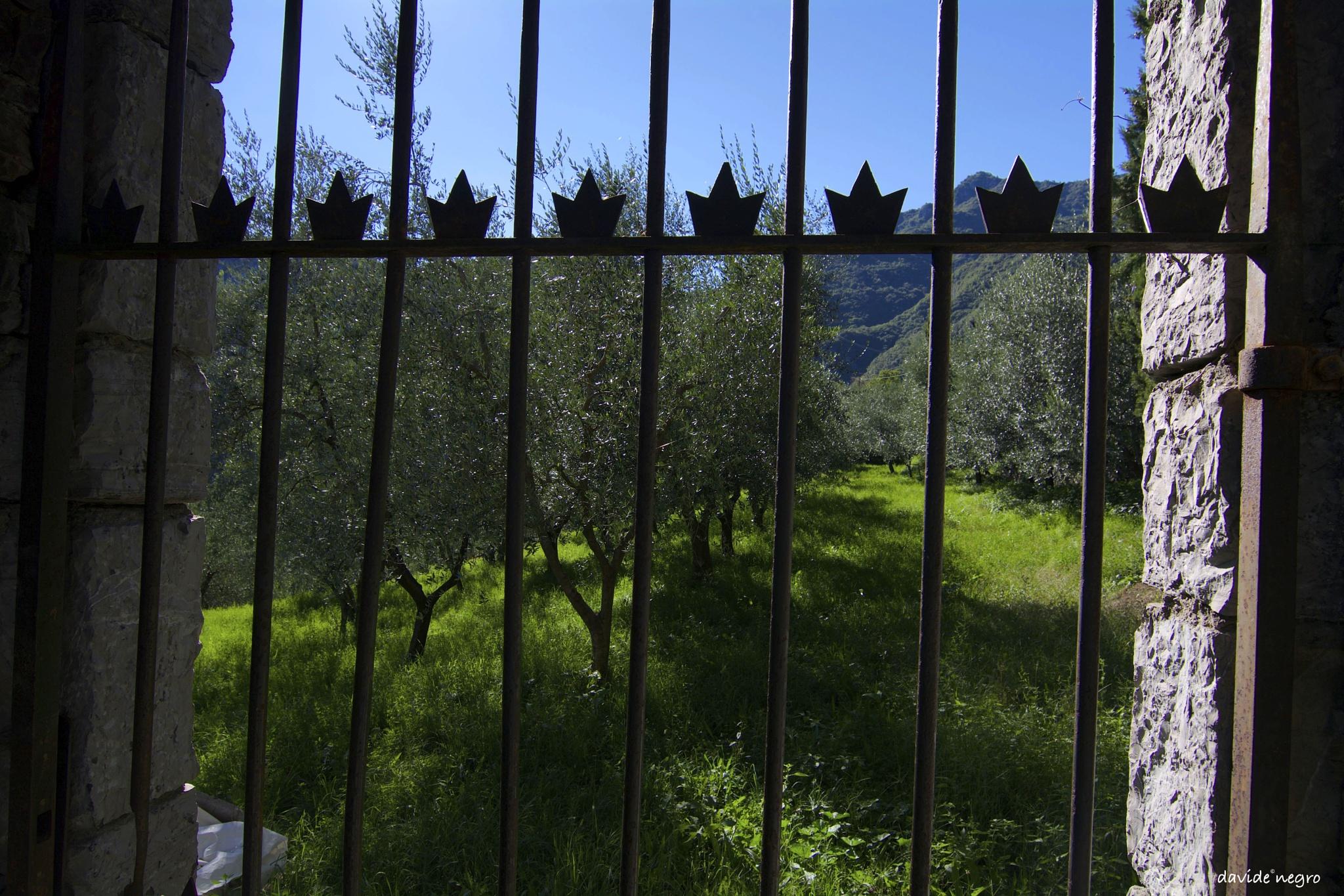 alberi by DavideNegro
