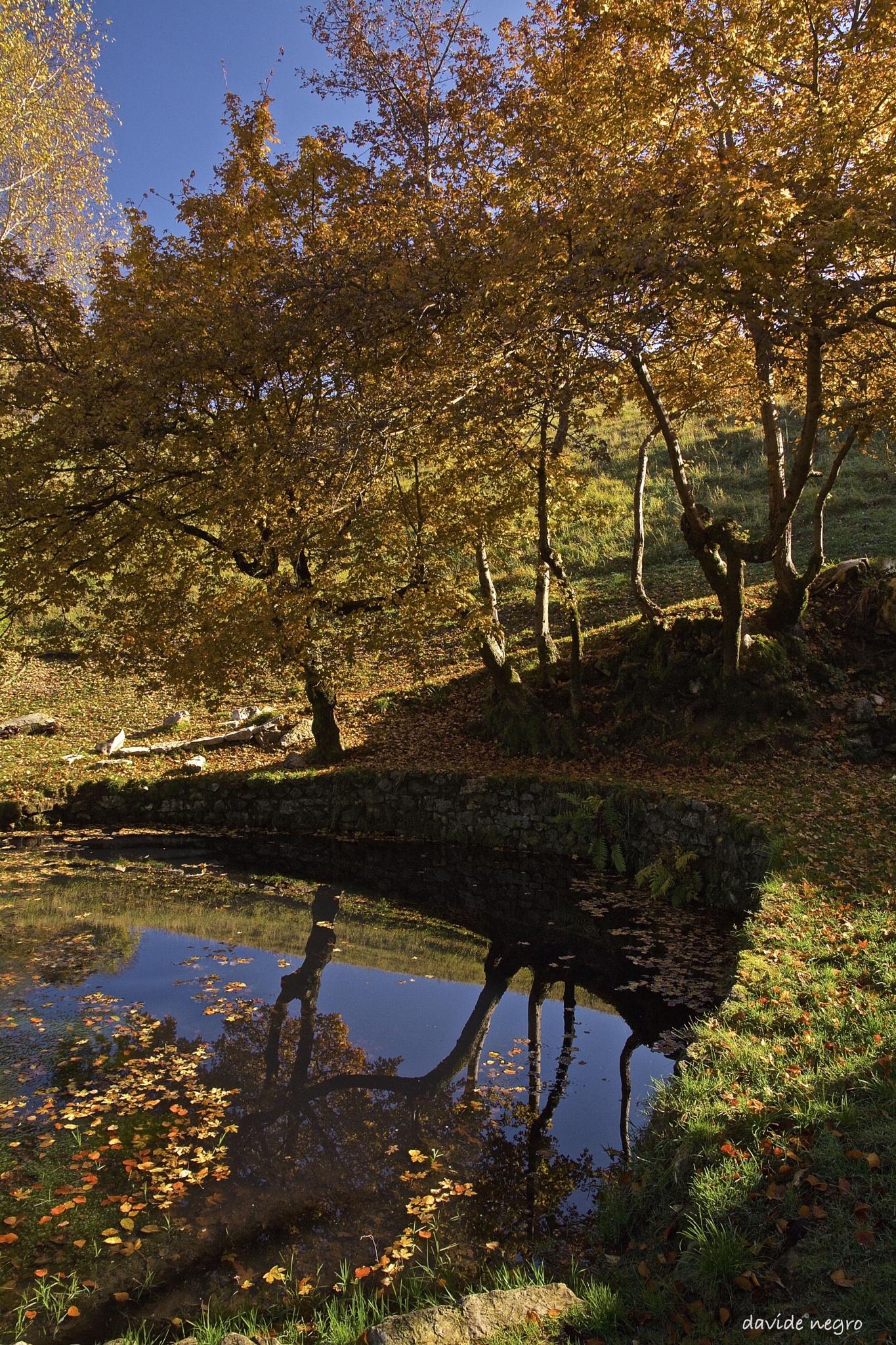 autunno by DavideNegro