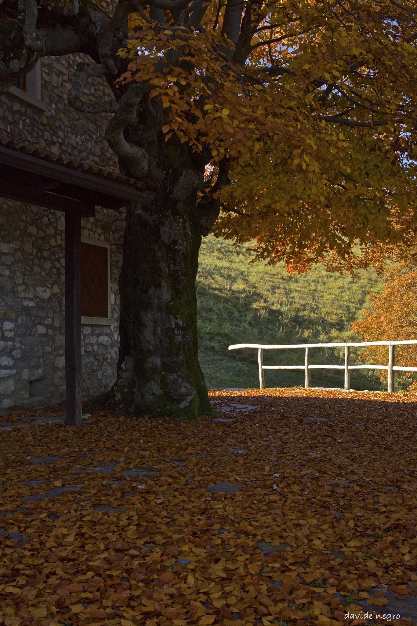 steccato by DavideNegro