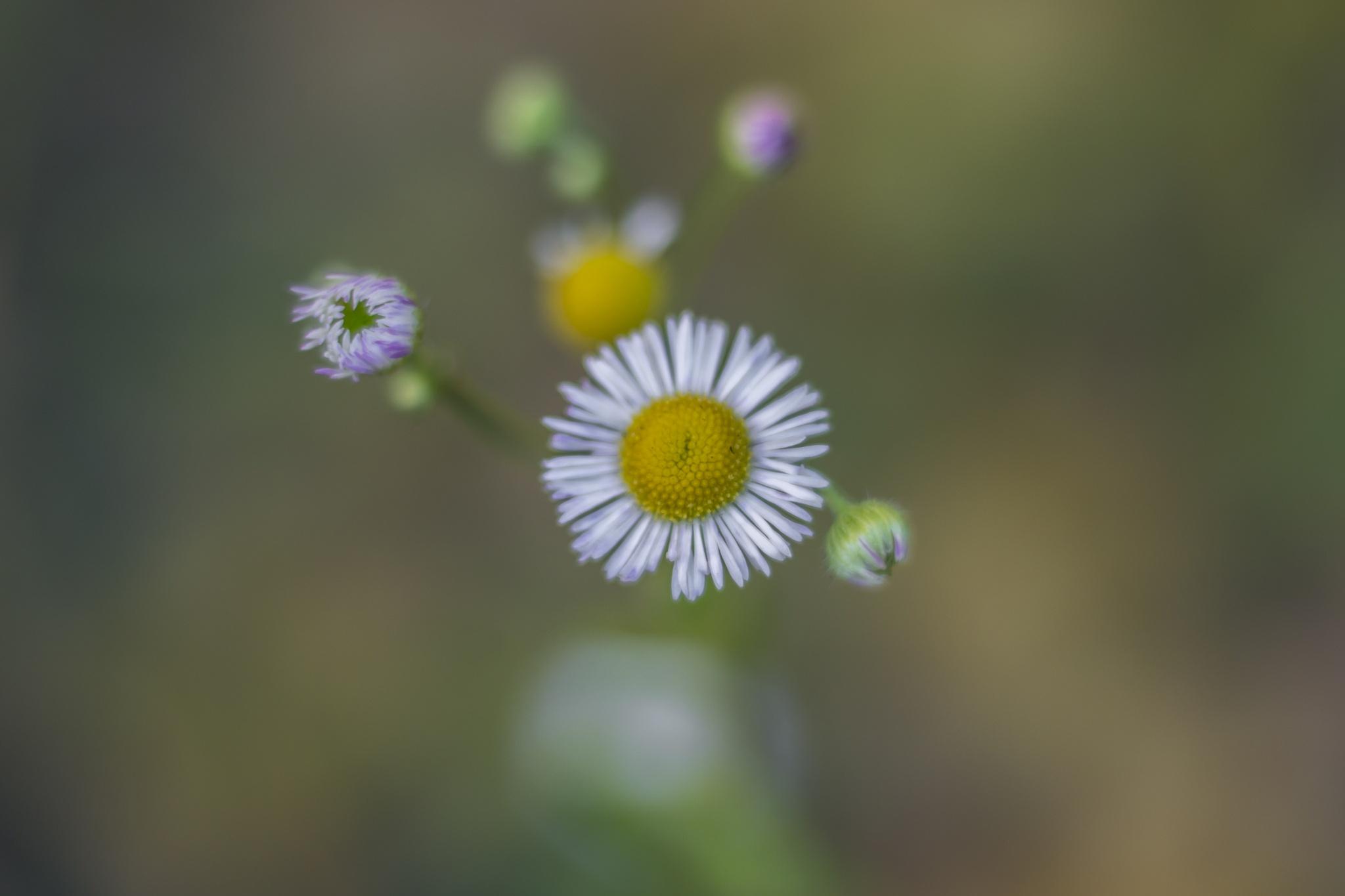 flower by Roman Borshovskyy