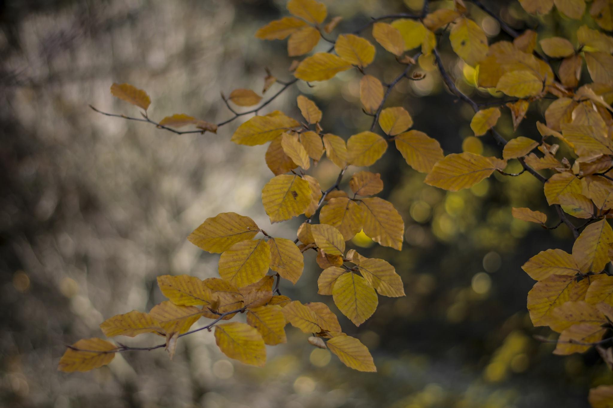 autumn leaves by Roman Borshovskyy