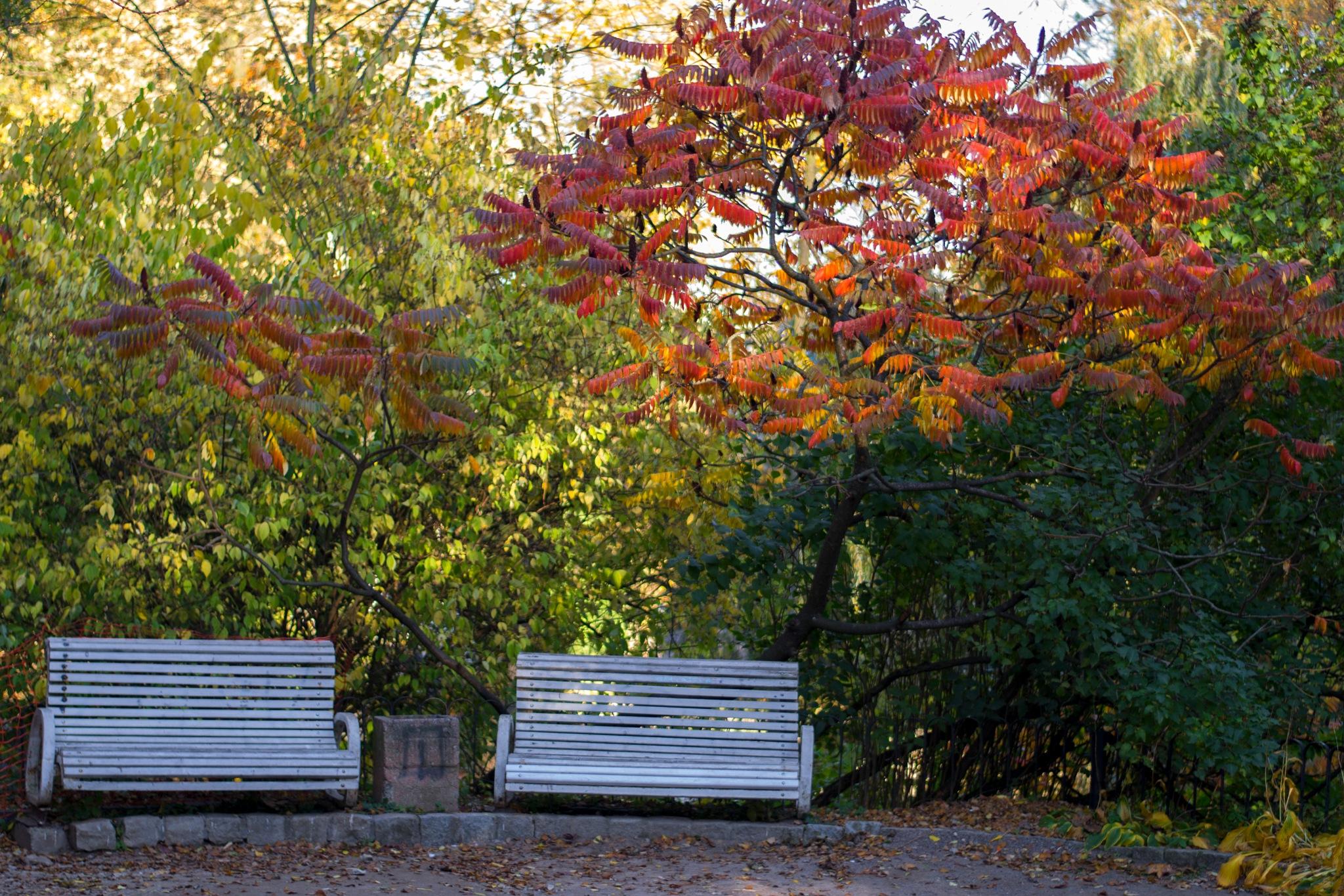 Autumn by Roman Borshovskyy