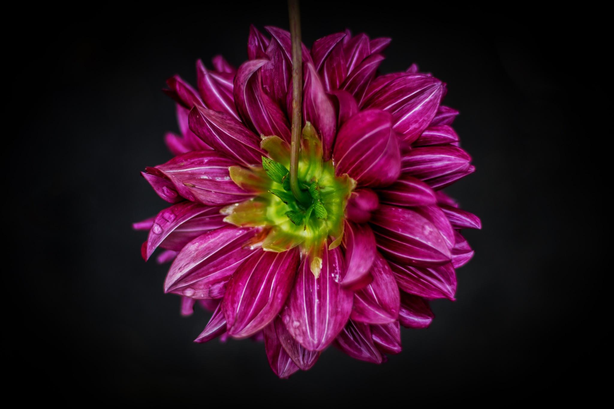 Flower in macro by Roman Borshovskyy