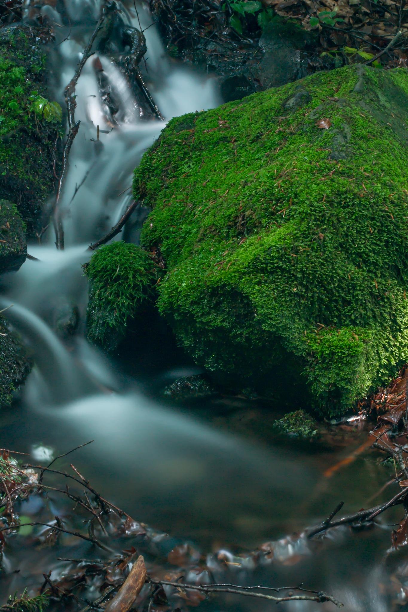 Water by Roman Borshovskyy