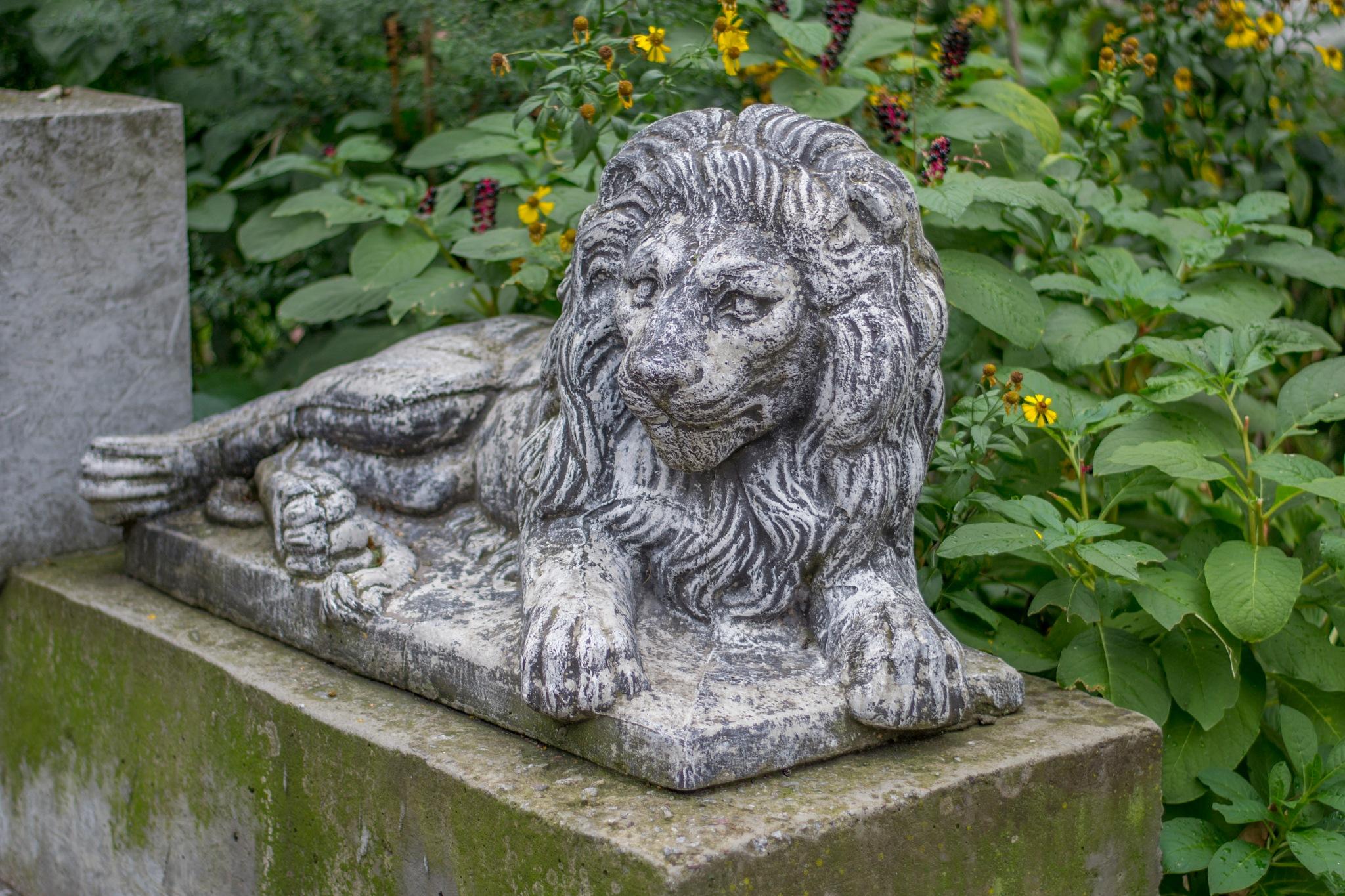 The sculpture of a lion - a symbol of Lviv by Roman Borshovskyy