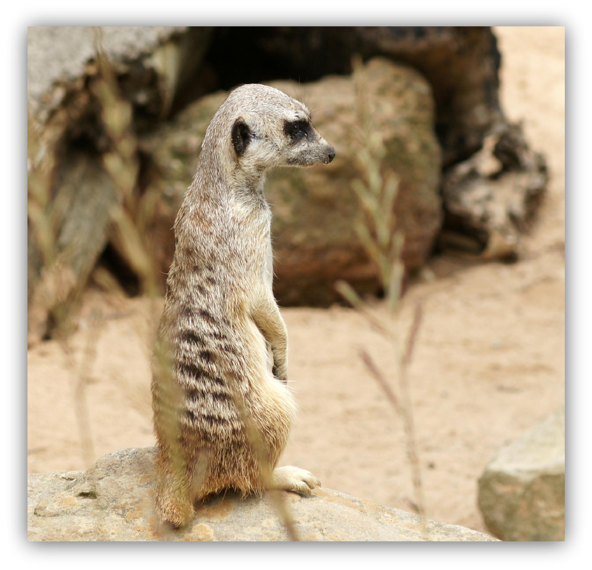 Sydney Zoo by  Sharon McCarthy