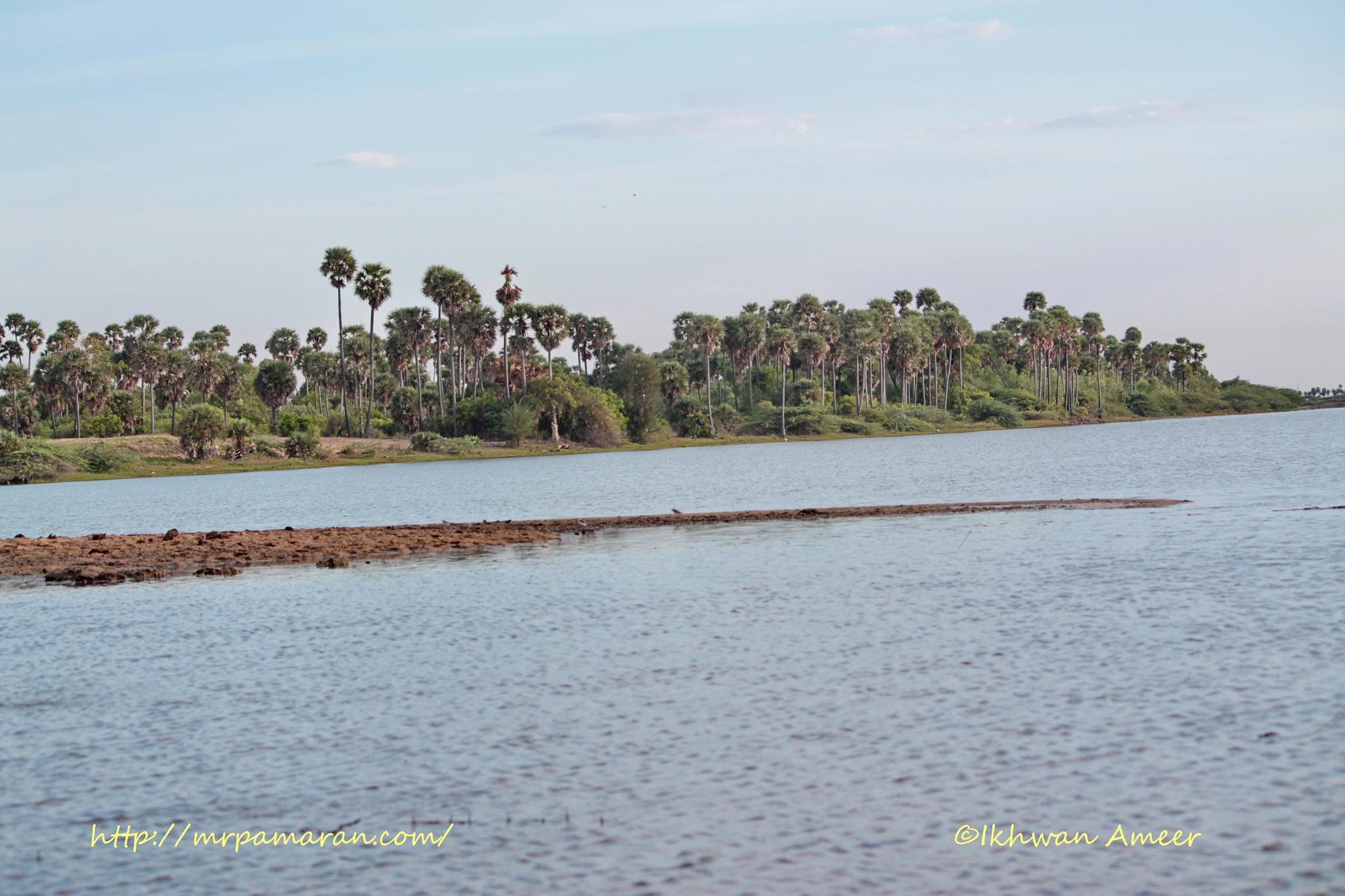 Best Group: palmyra Trees by Ikhwan Ameer
