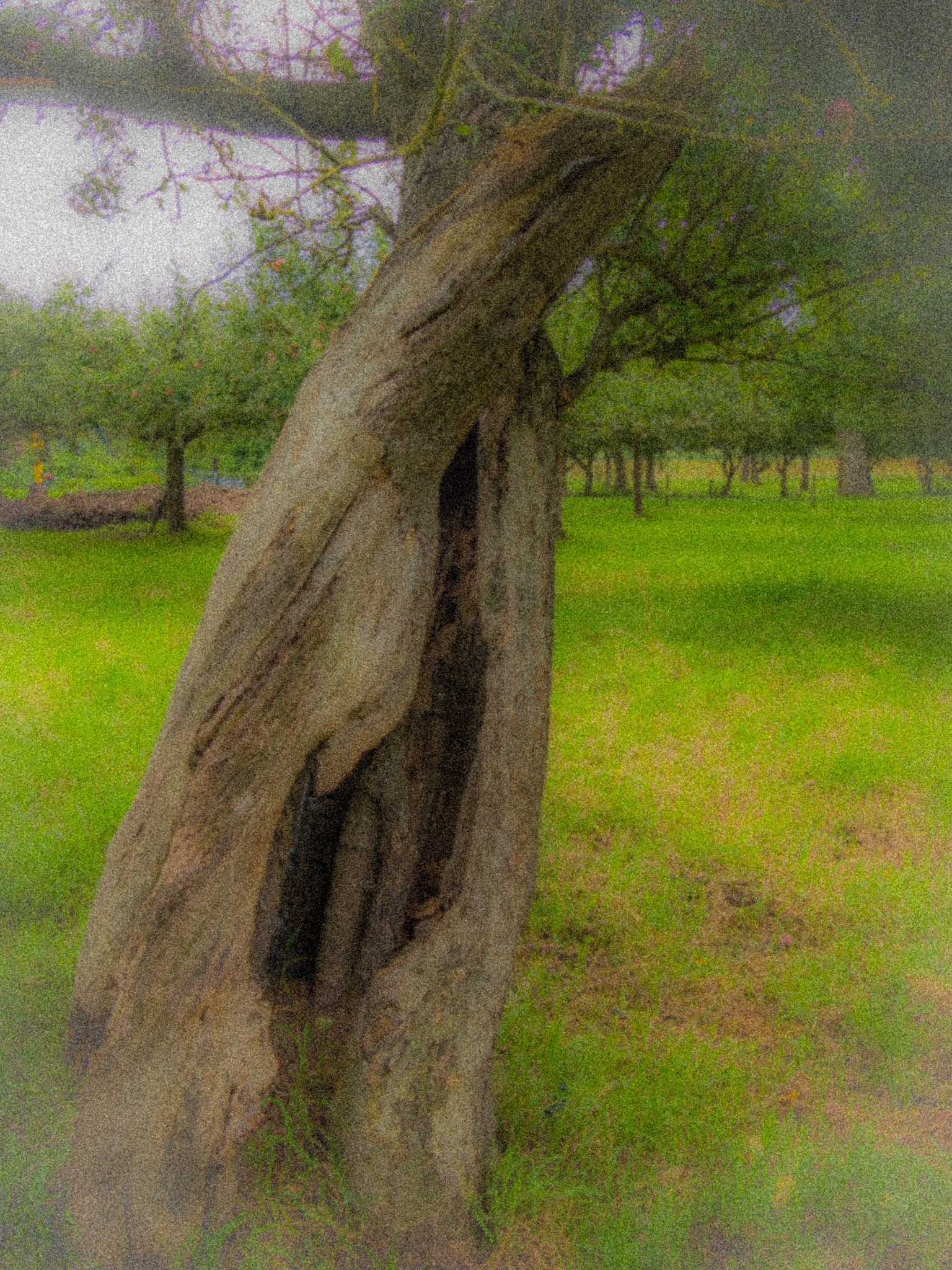 hollow tree by Paul Geutjes