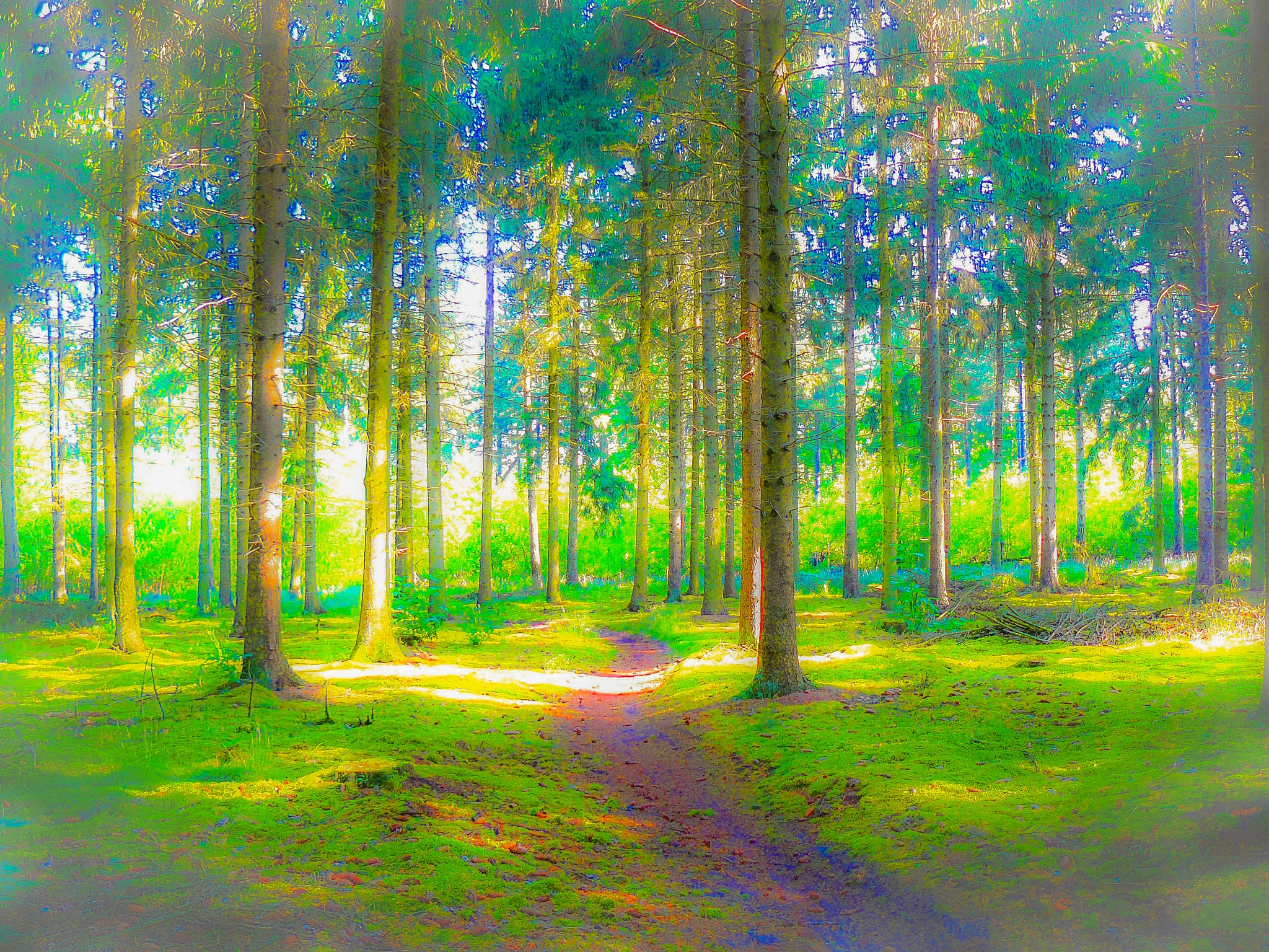 Woods in Limburg by Paul Geutjes
