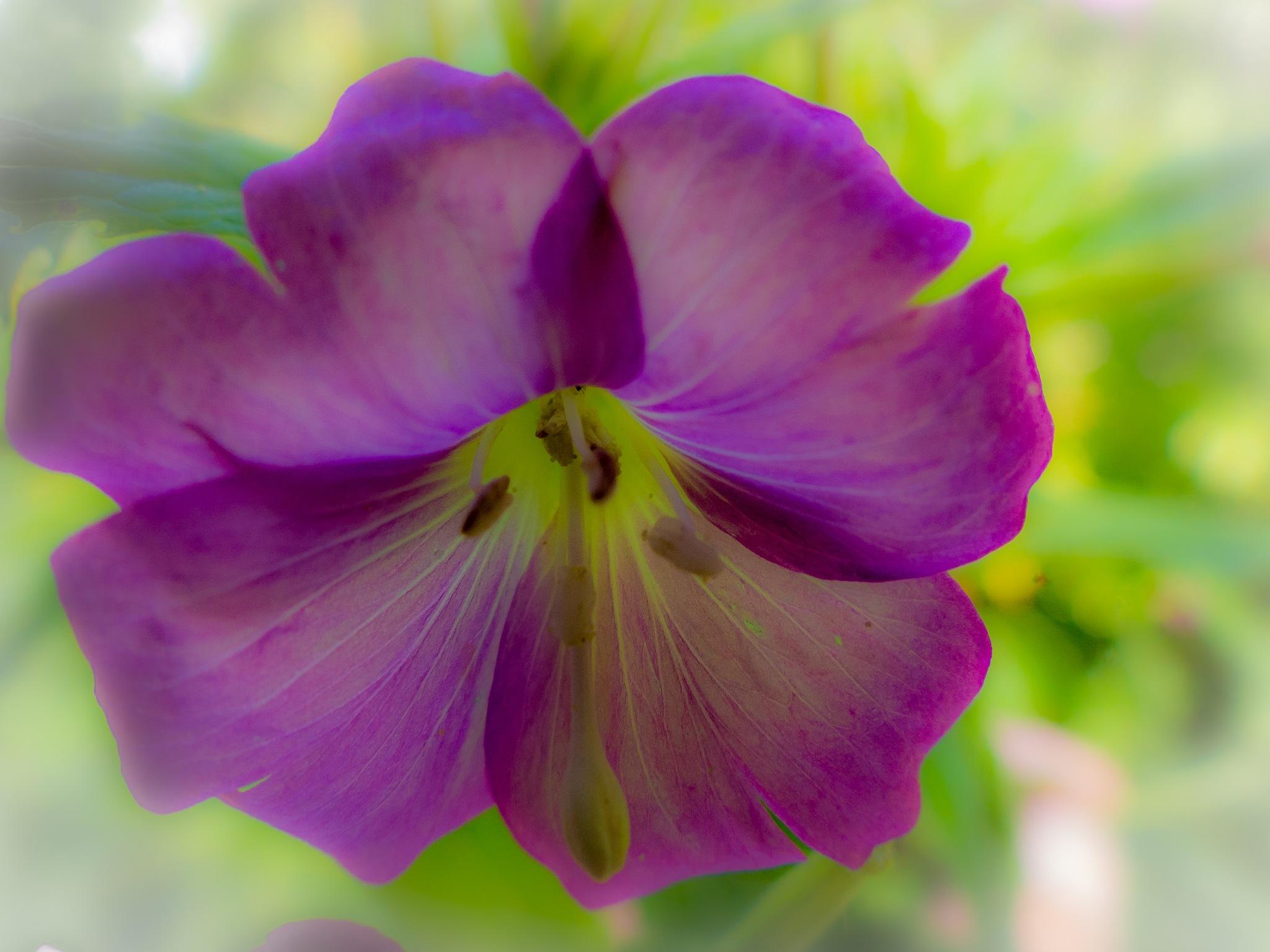 flower 2 by Paul Geutjes