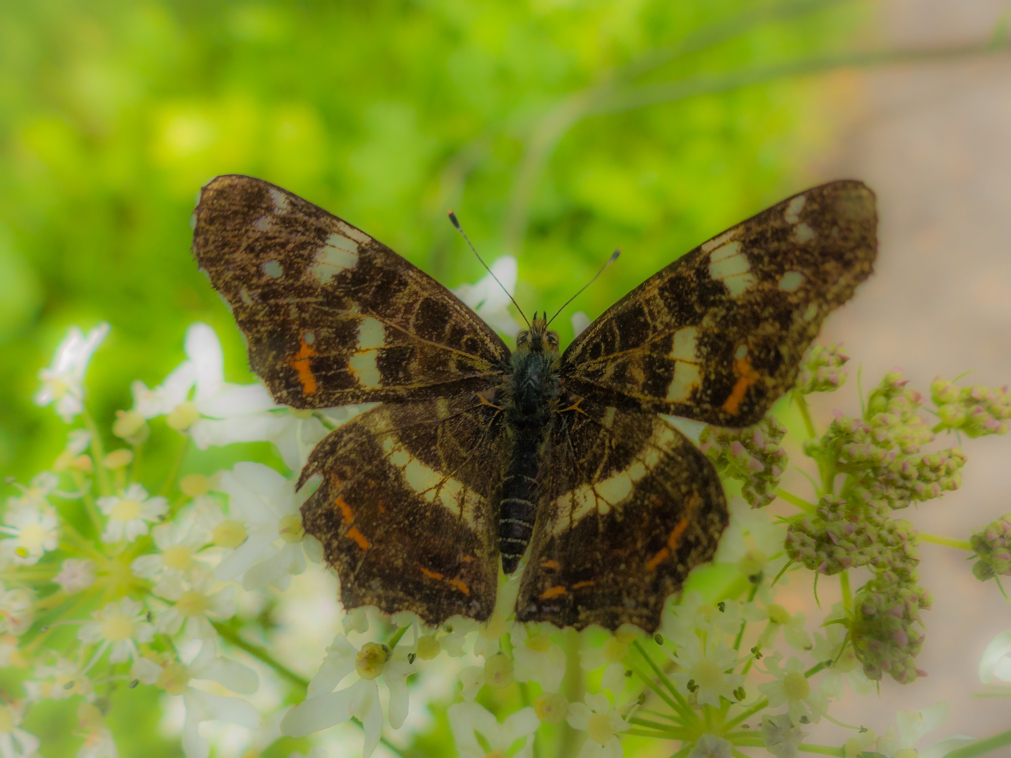 butterfly by Paul Geutjes