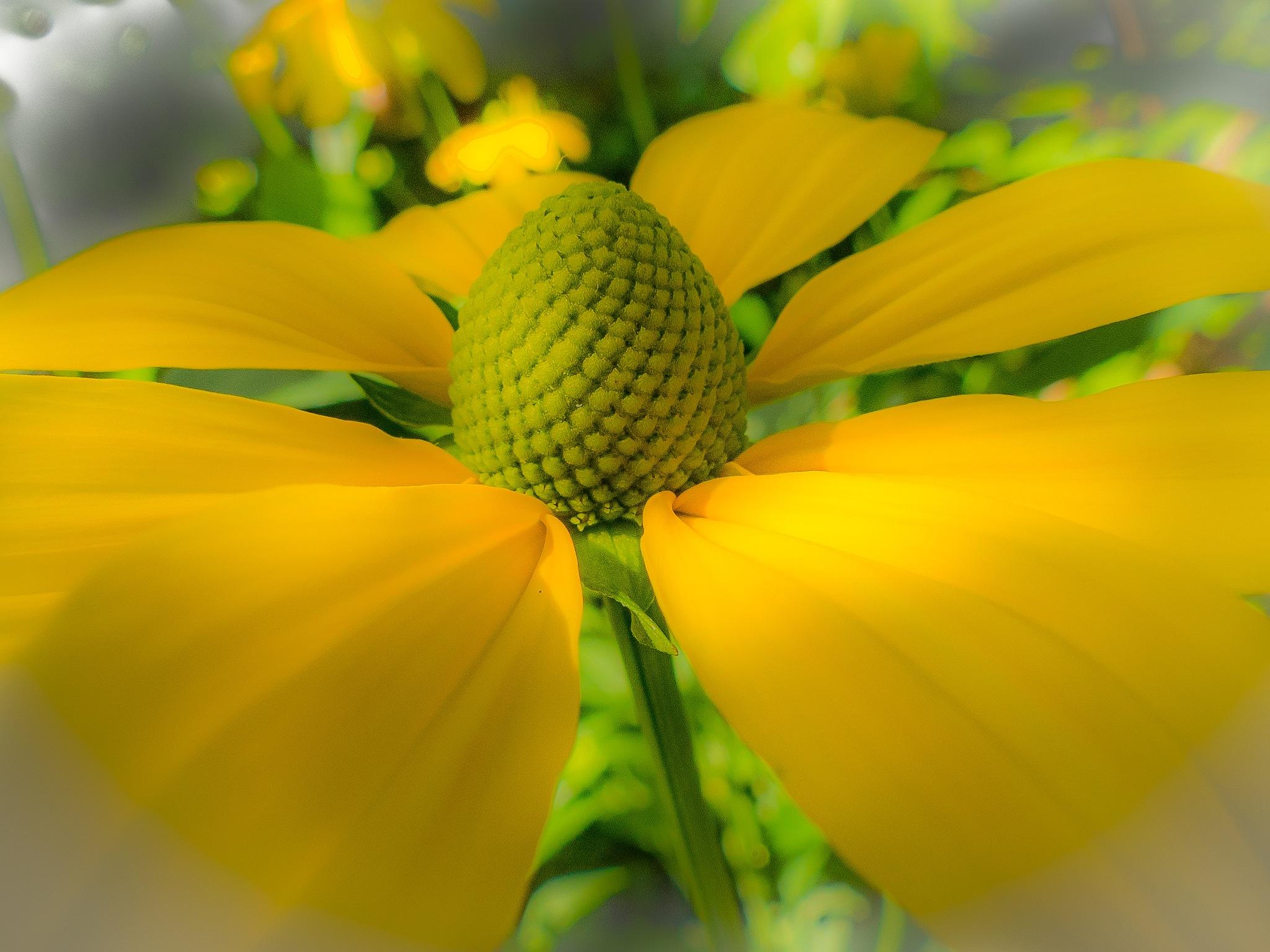 flower by Paul Geutjes