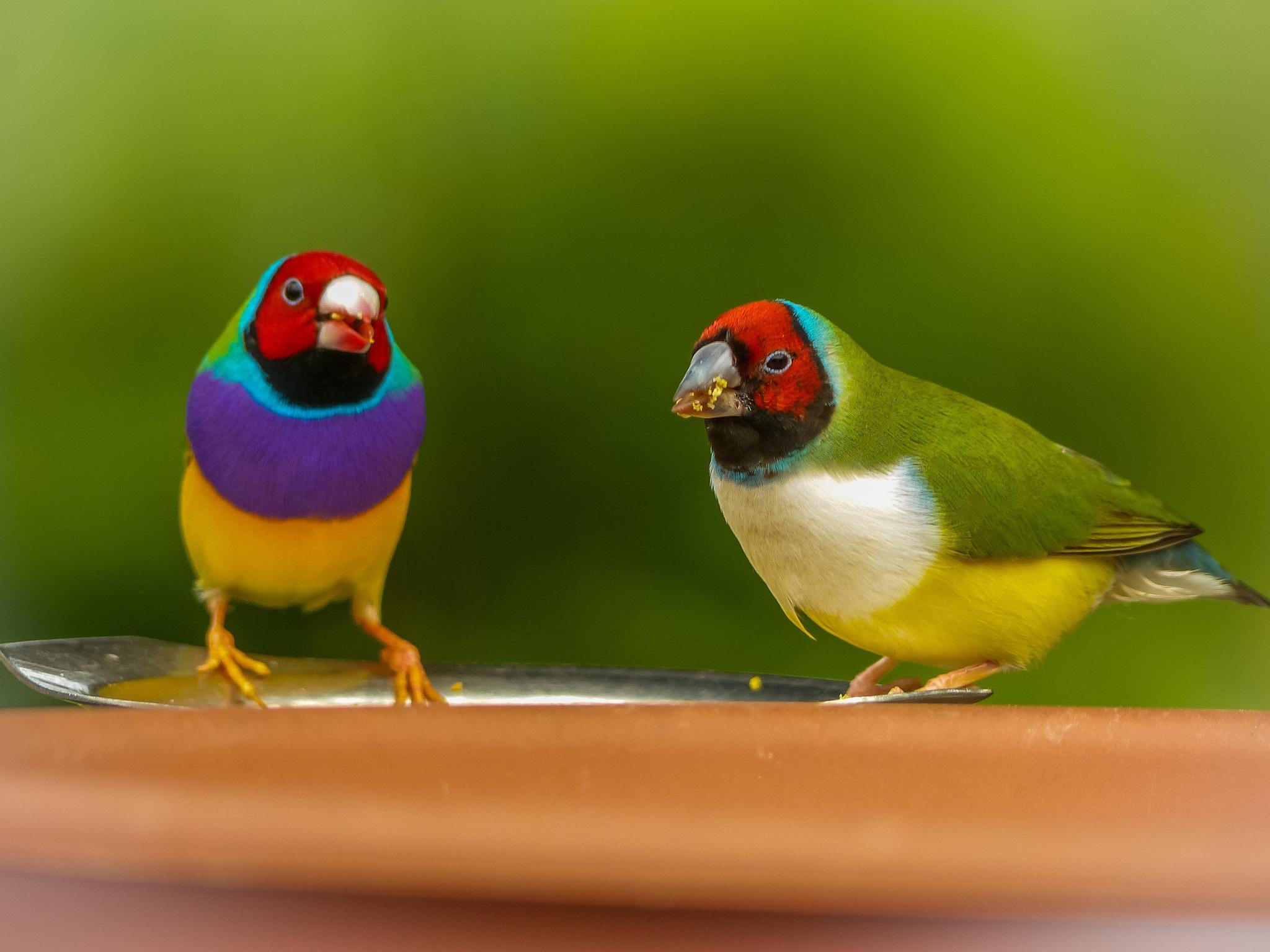 birds by Paul Geutjes