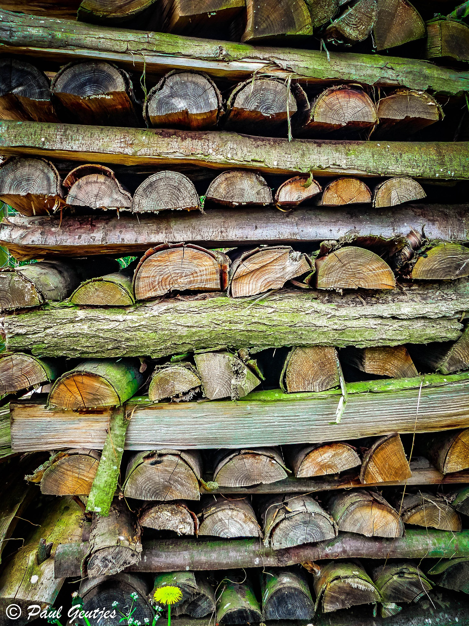 Piled Wood by Paul Geutjes