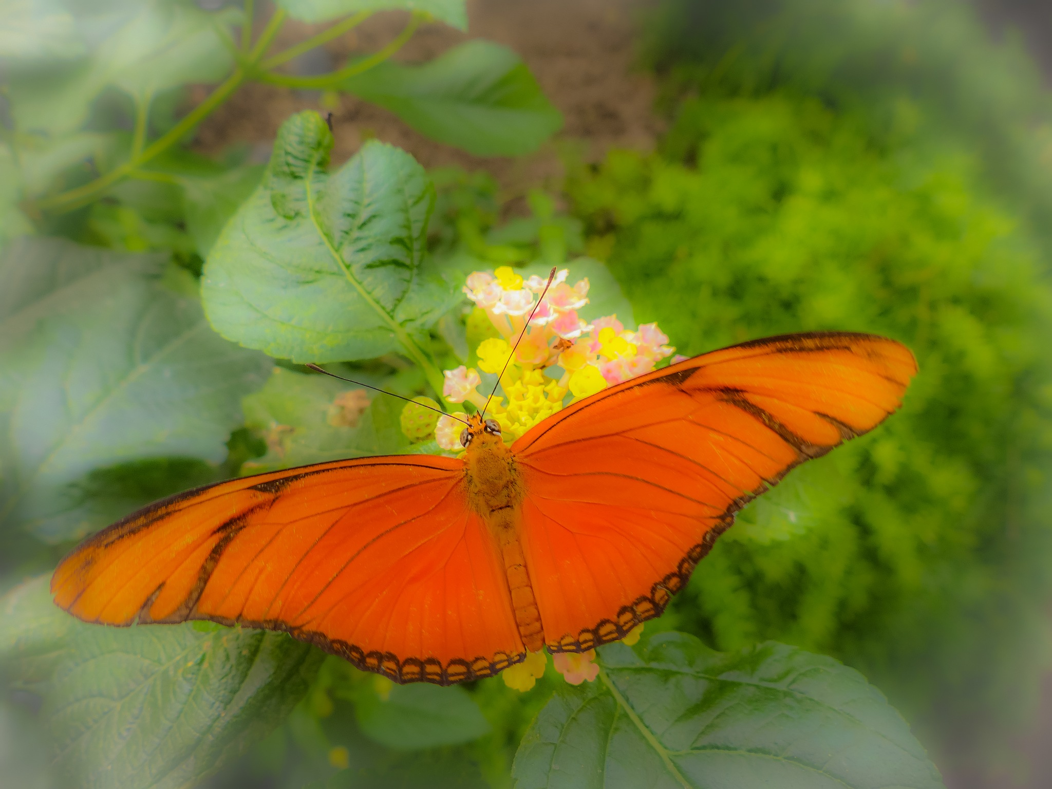 Butterfly 6 by Paul Geutjes