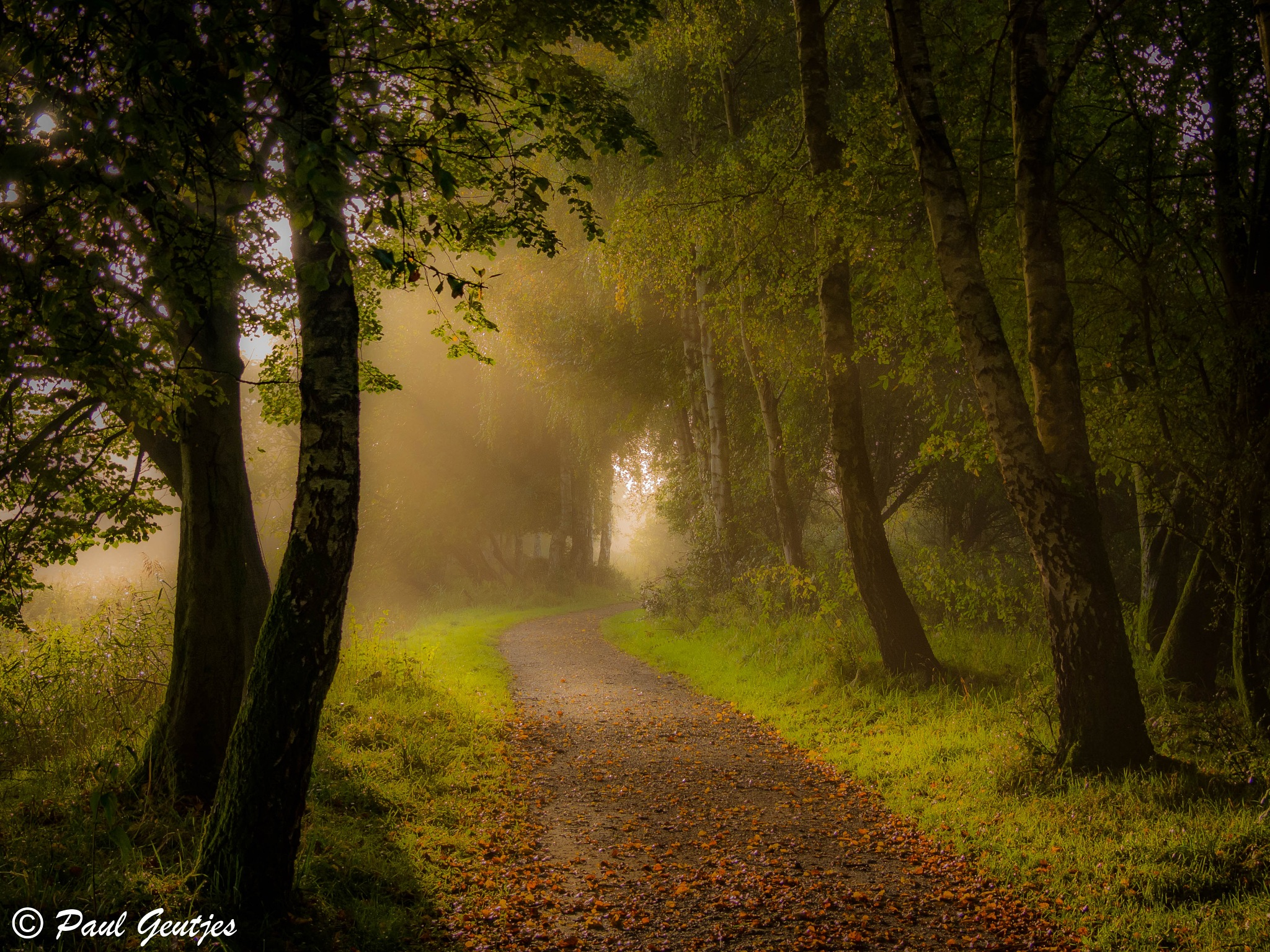 Morning mist in the forrest by Paul Geutjes