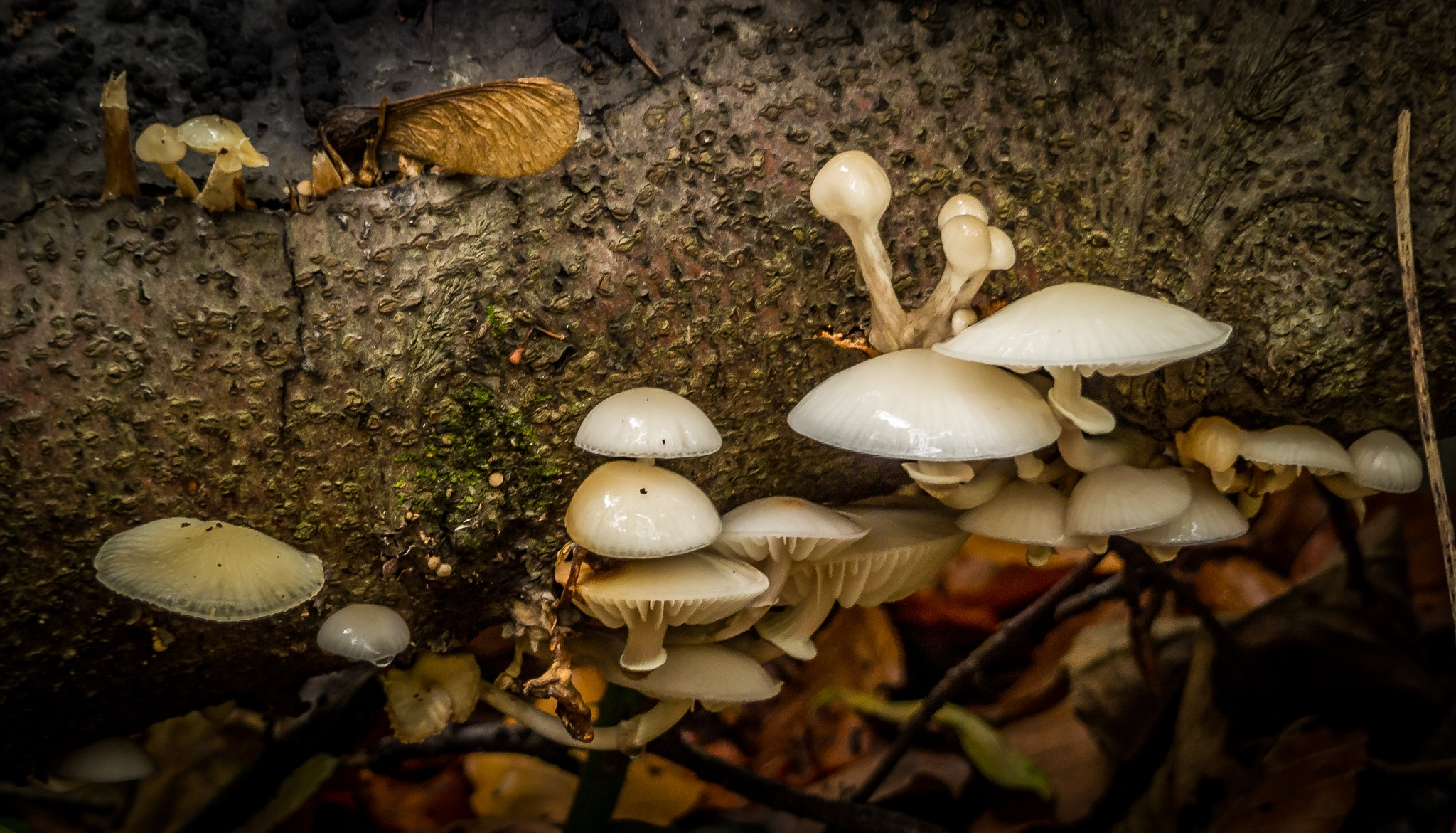fungi 3 by andre.belg
