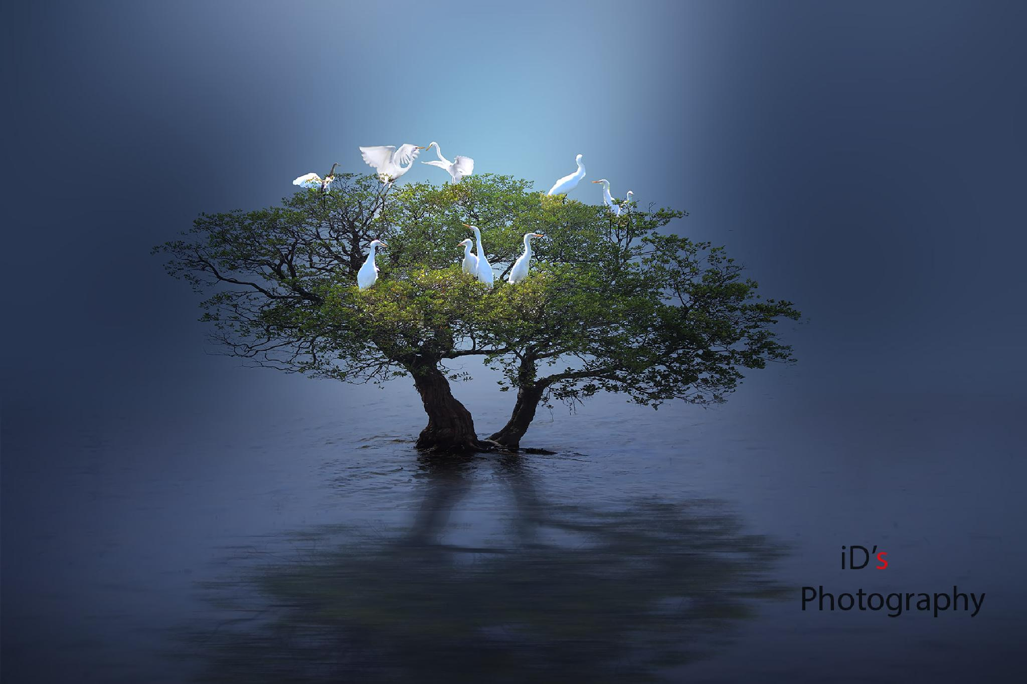 Untitled by iD's