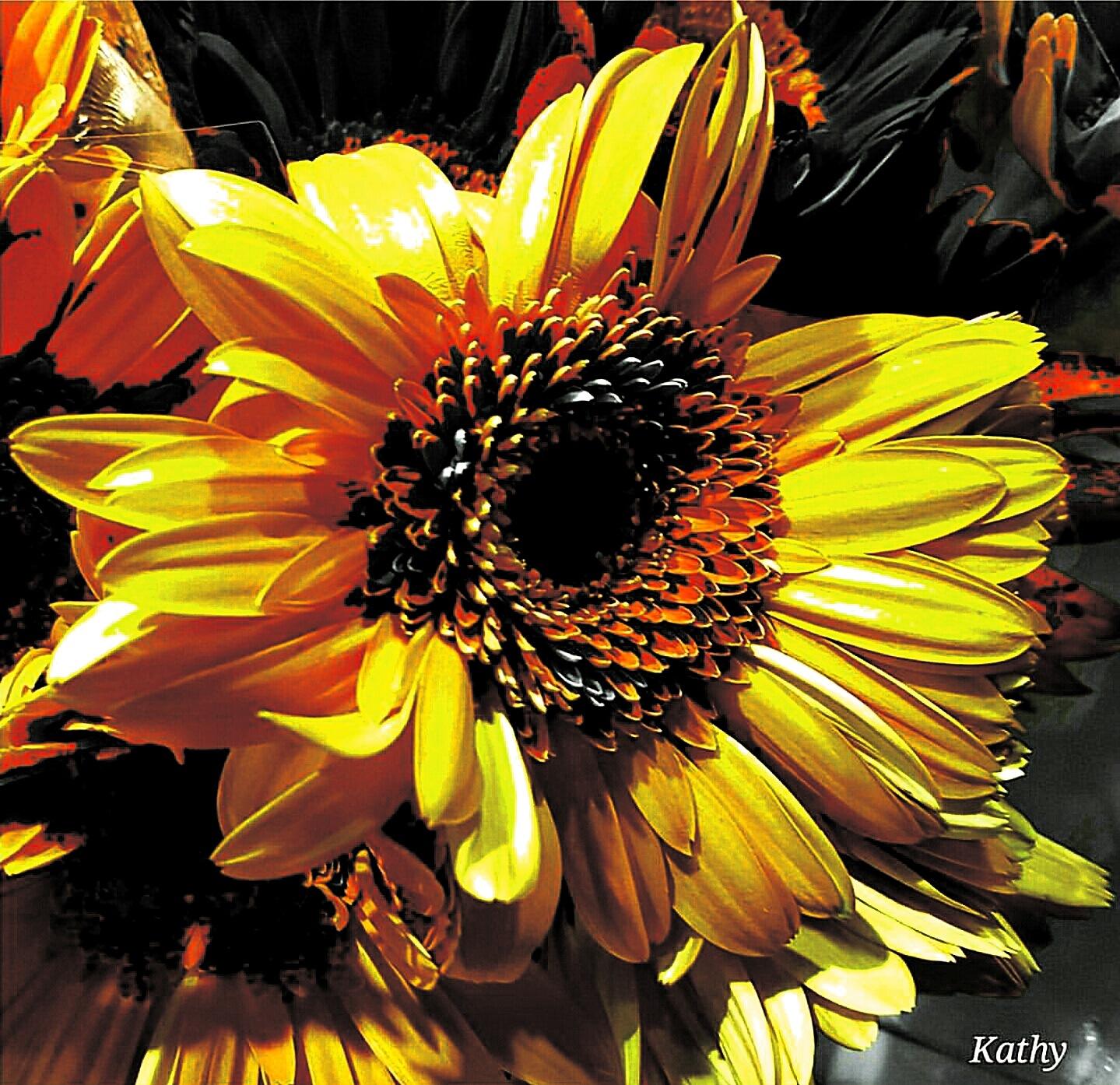 Colorsplash  by Kathy Sullivan APRN