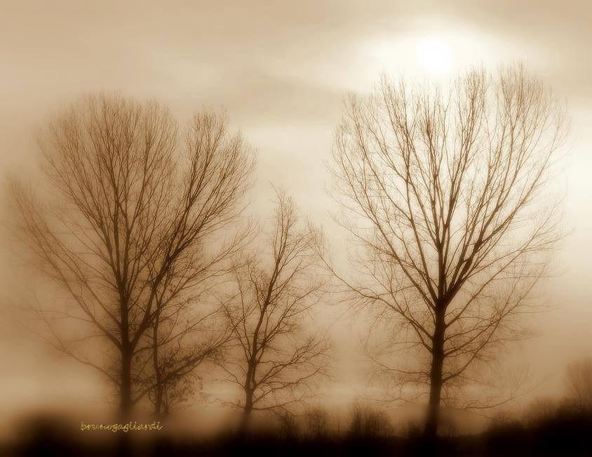 Untitled by brunogagliardi49