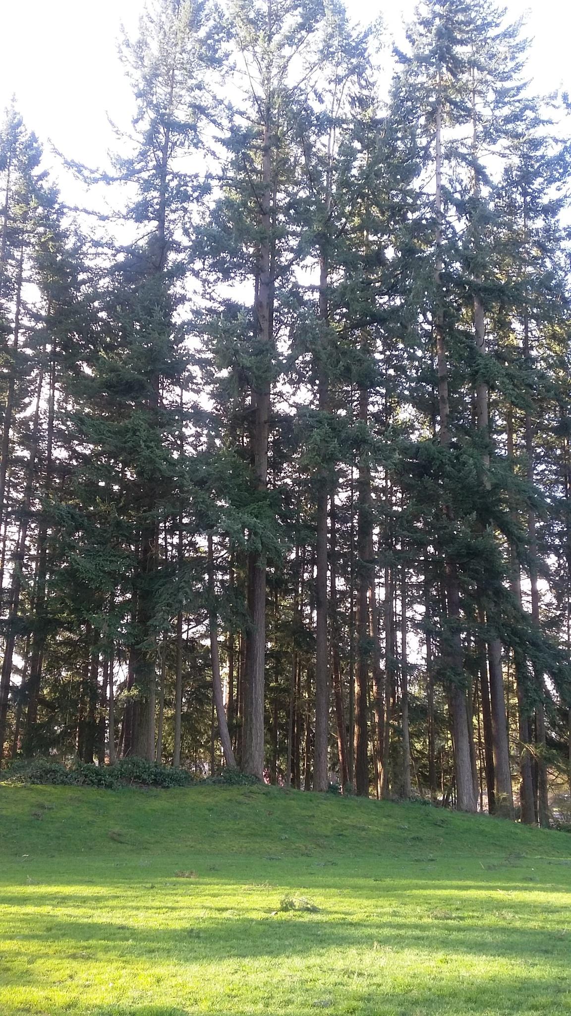 the trees  !! by Elizabettvan