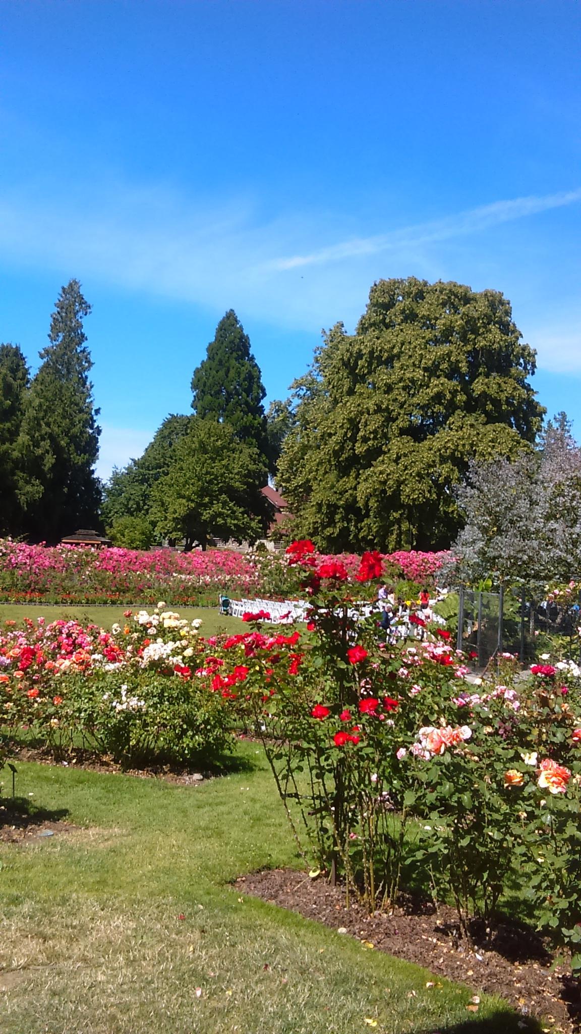 the garden !!! by Elizabettvan
