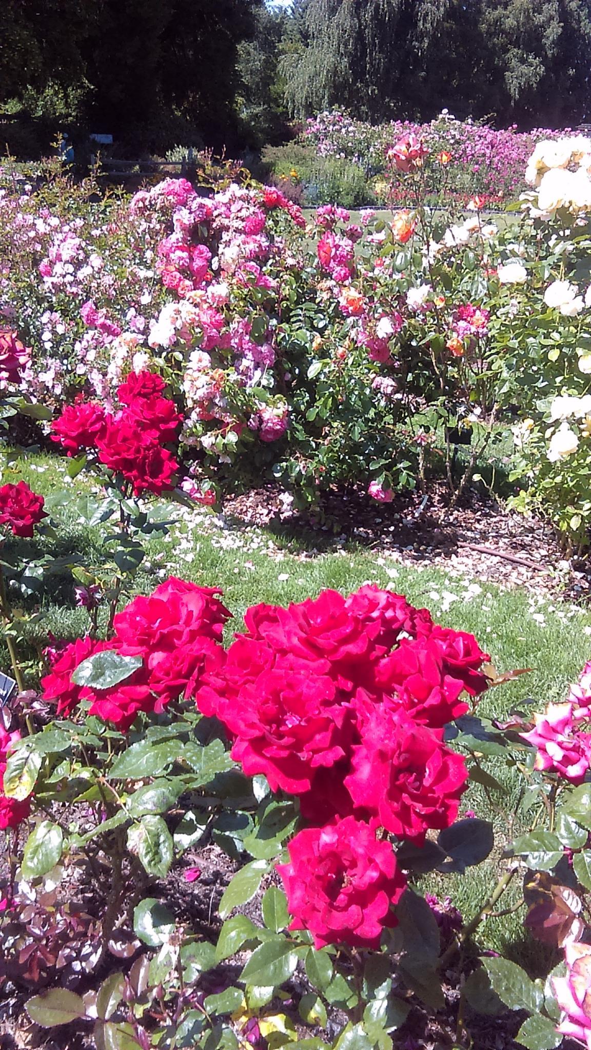 the garden #3 by Elizabettvan