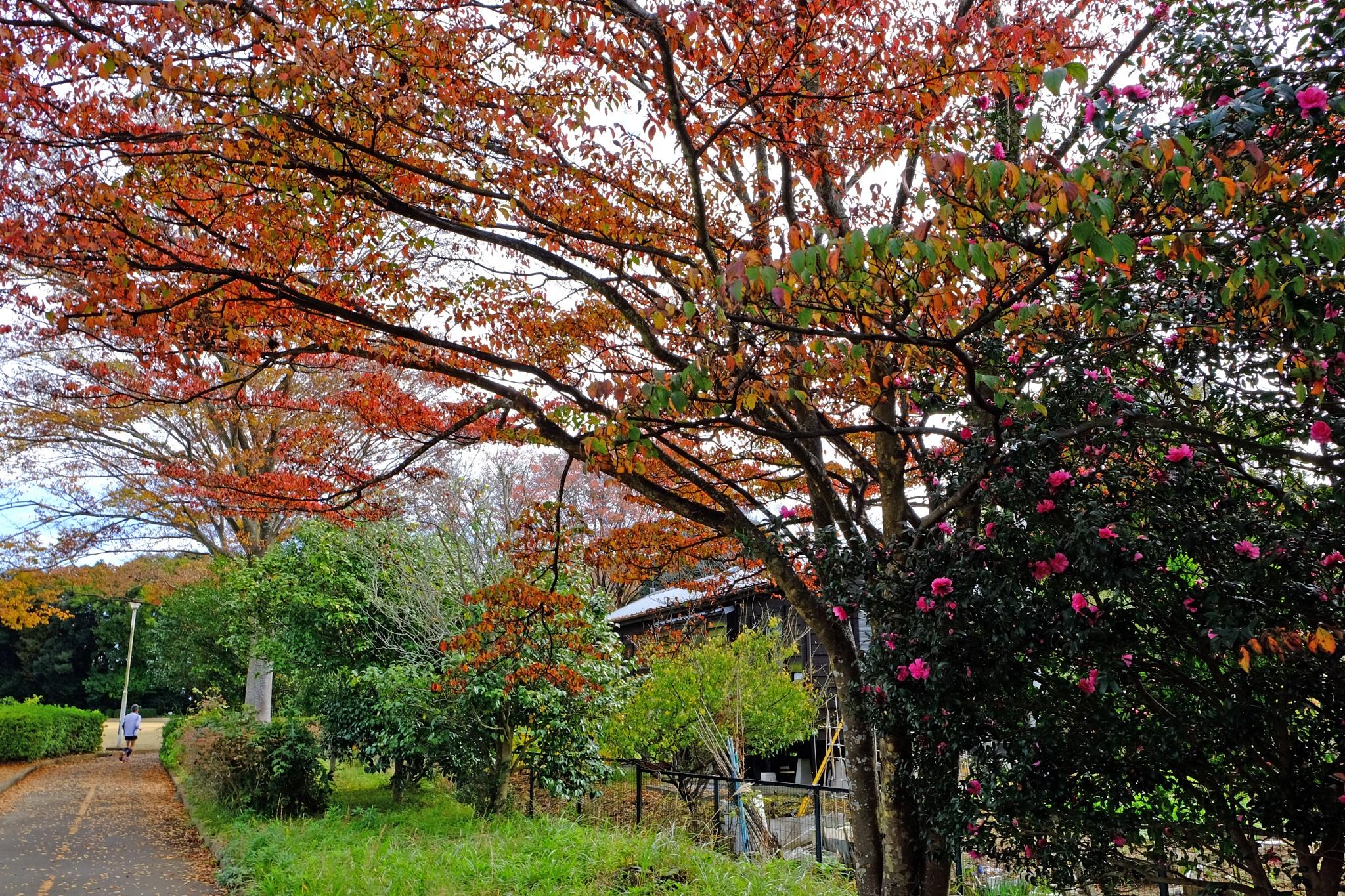 It runs through the autumn day by Kazuo Ishikawa