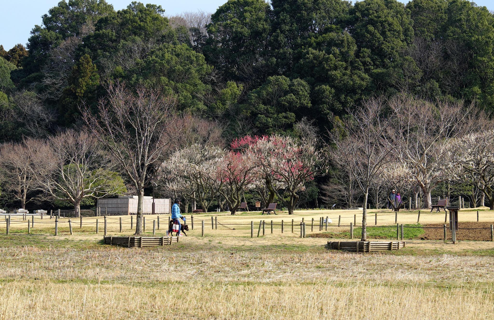 Kairakuen Park  by Kazuo Ishikawa