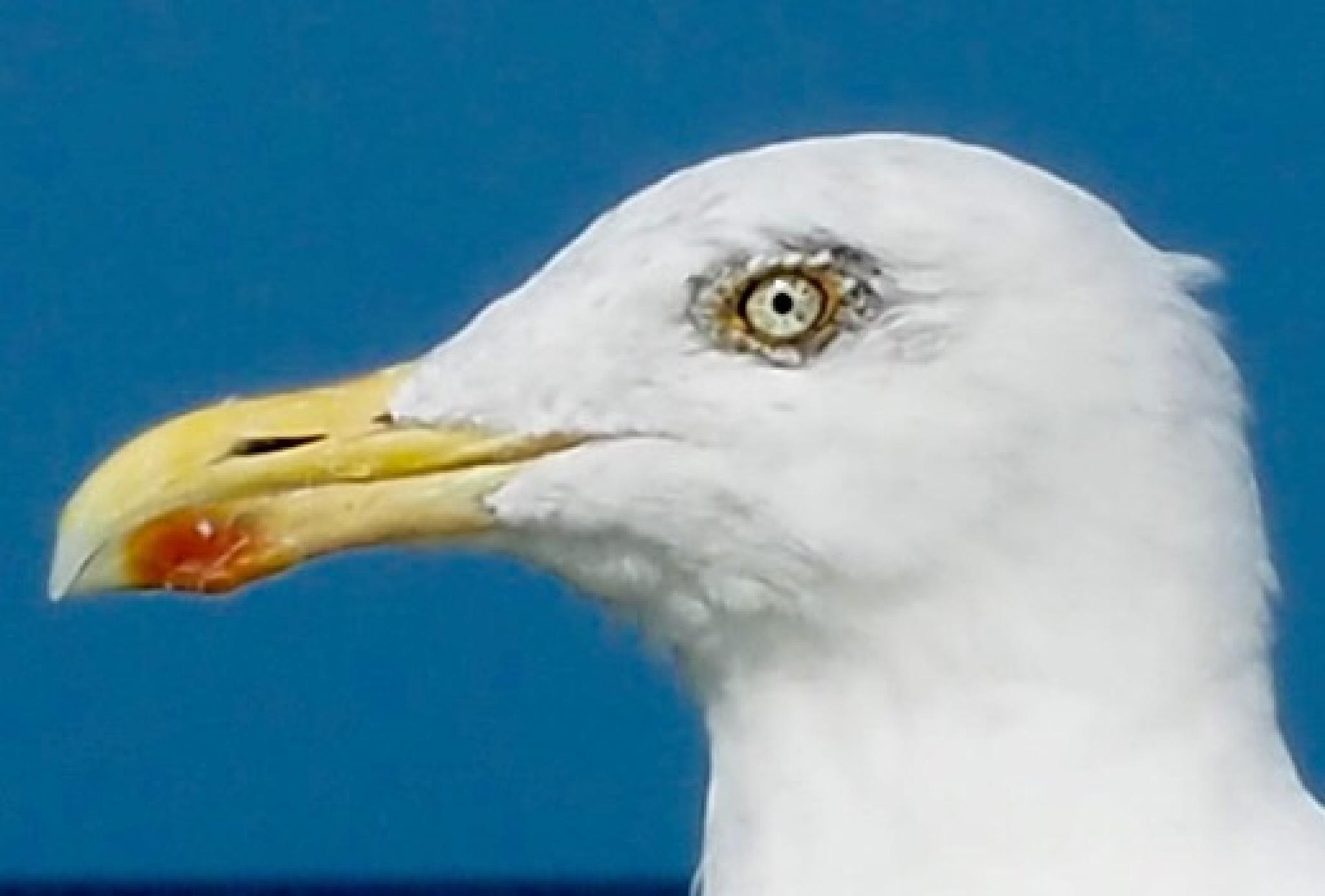 I have an eye on you by henningwaschk