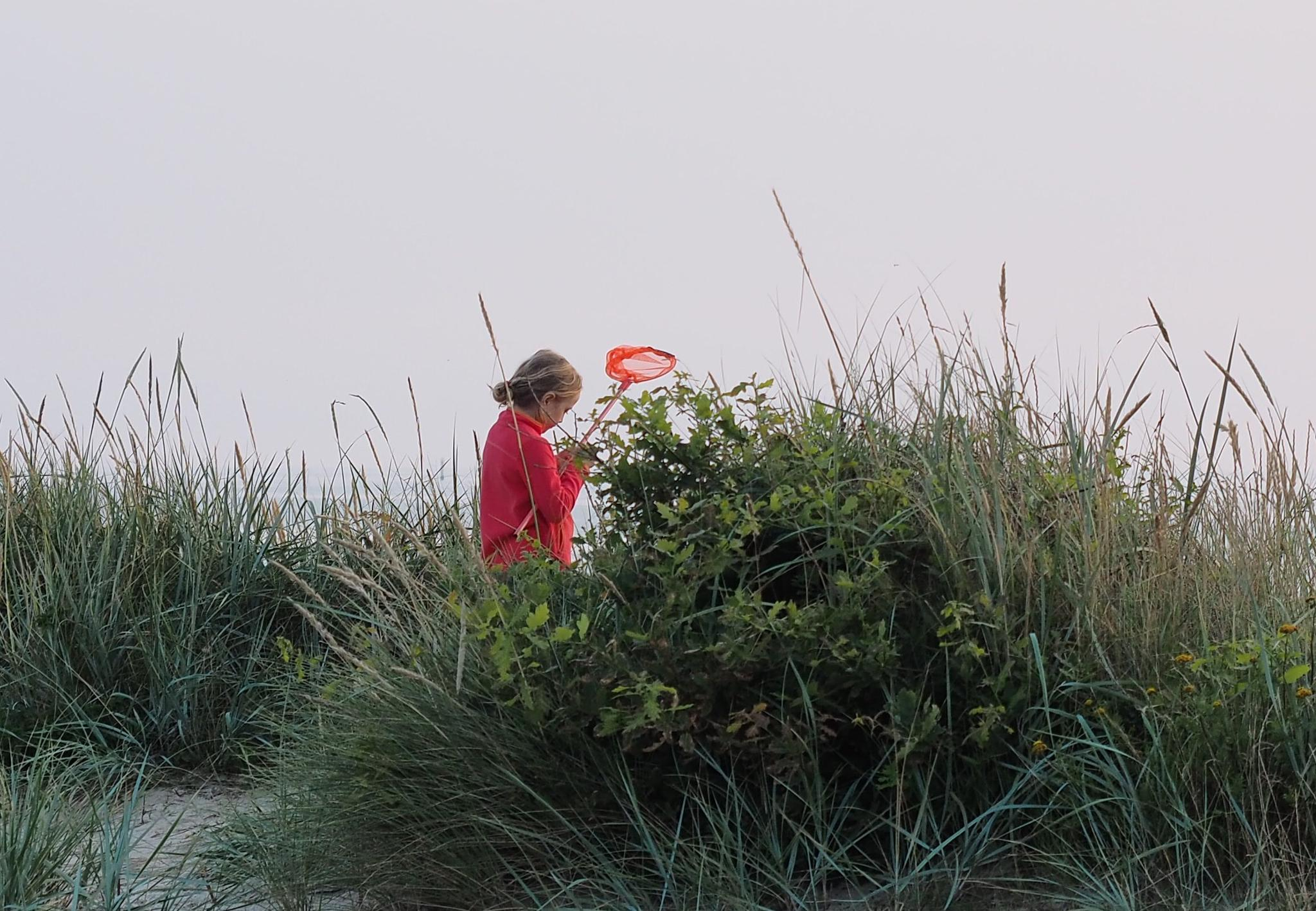 In the dunes: Young scientists catching ... by henningwaschk