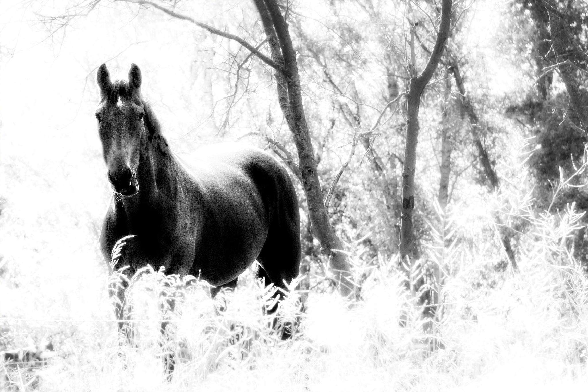Horse & trees by catarina.kent