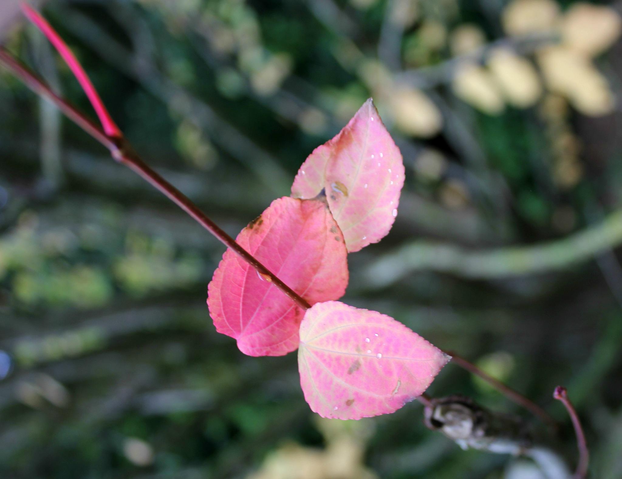 autumn leaves by ninascotland