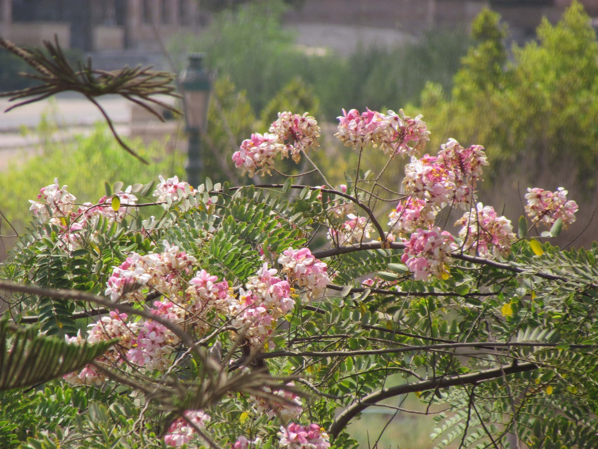 Spring flowers by Wael Wafi