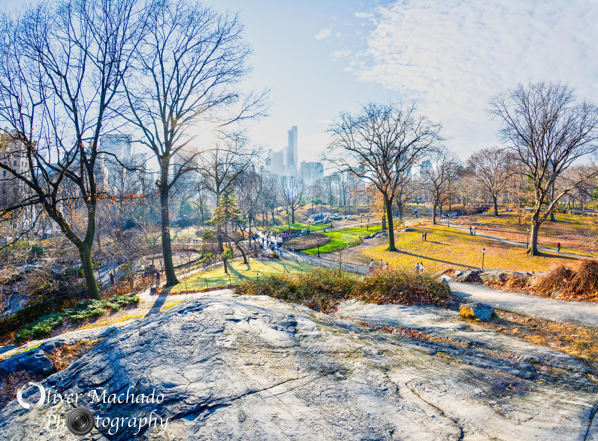 View of New York City from Central Park by Oliver Machado
