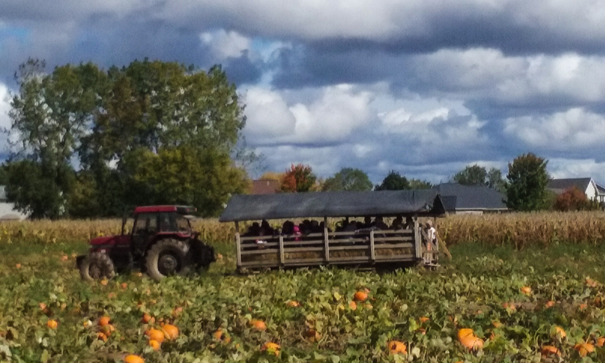Hayride by Mark Morrison-LeMay