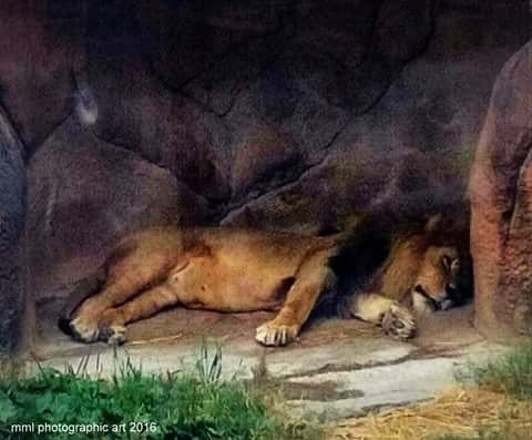 Let Sleeping Cats Lie by Mark Morrison-LeMay