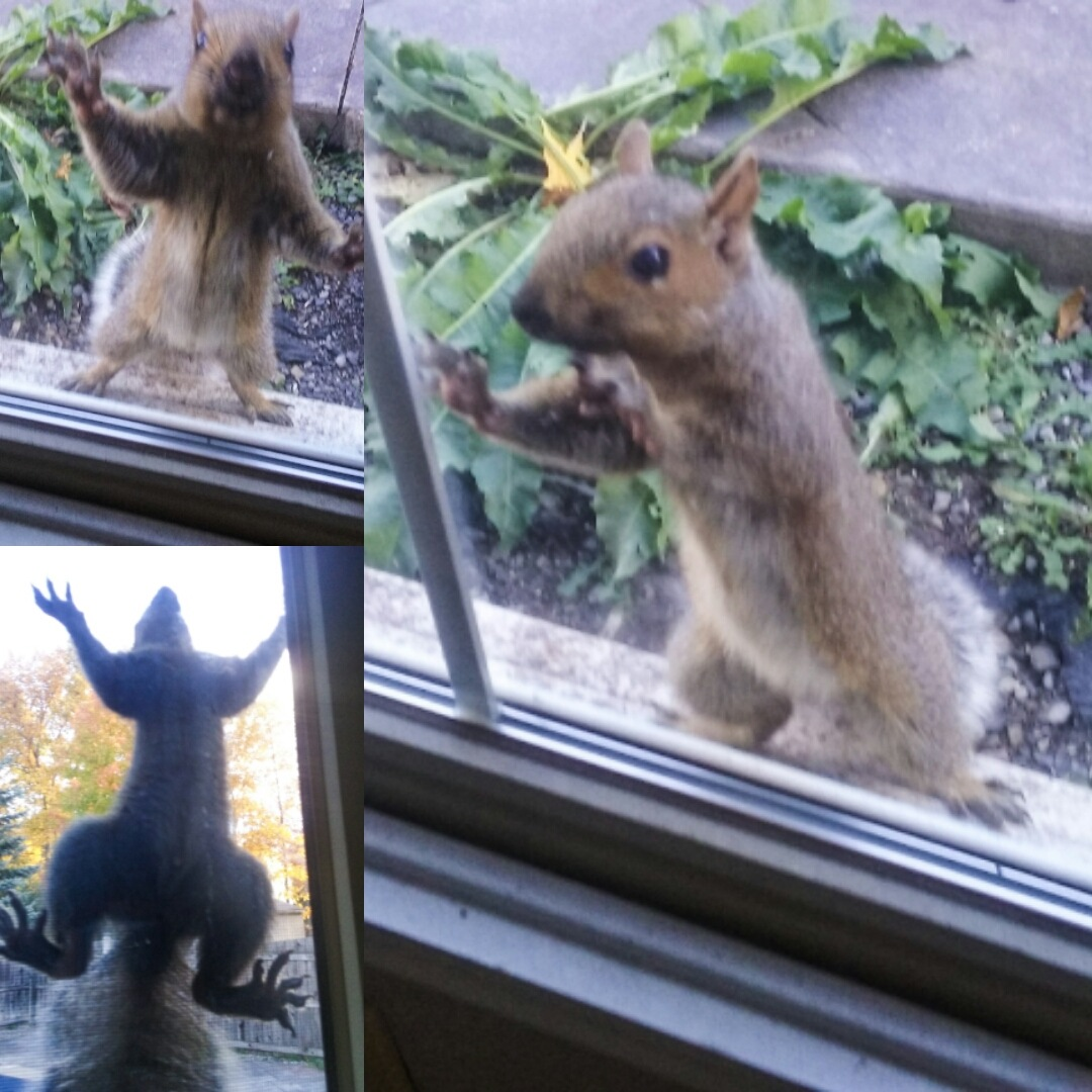 squirrel antics by Mark Morrison-LeMay