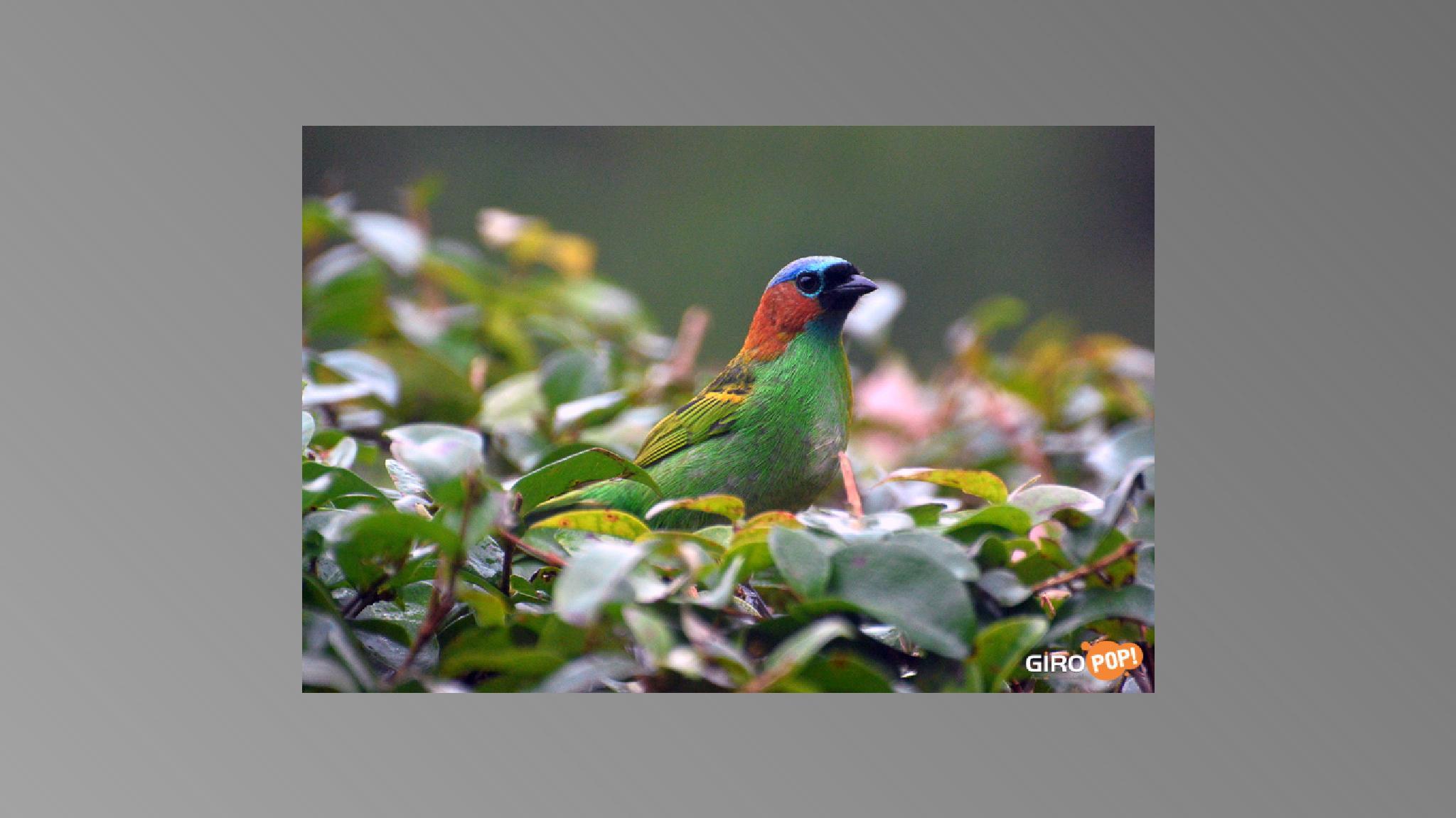 Birds at home; Oiseaux à la maison; Aves em casa... by beto.itapoa.s.c