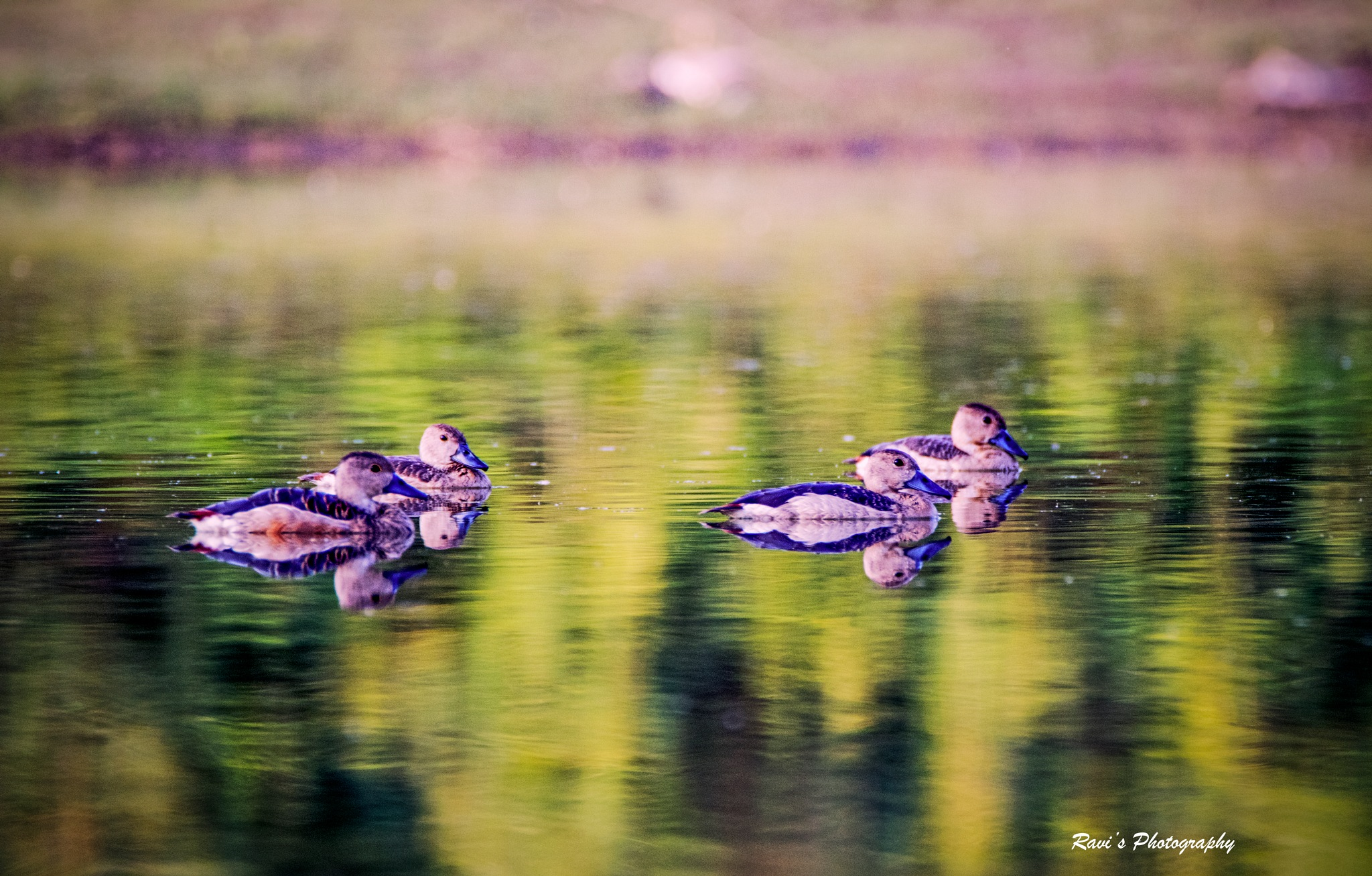 Swimming Family by Clicks_ravi