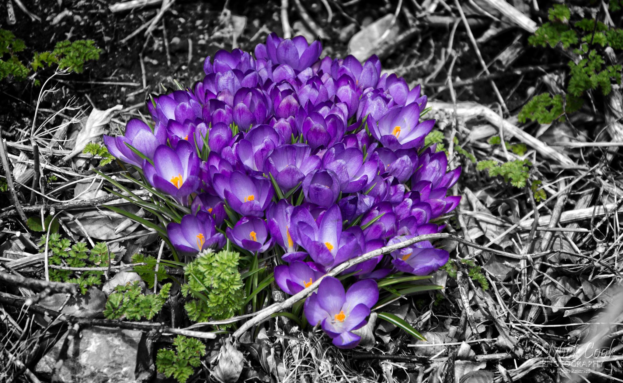 It's a Crocus Life by DooDaa66