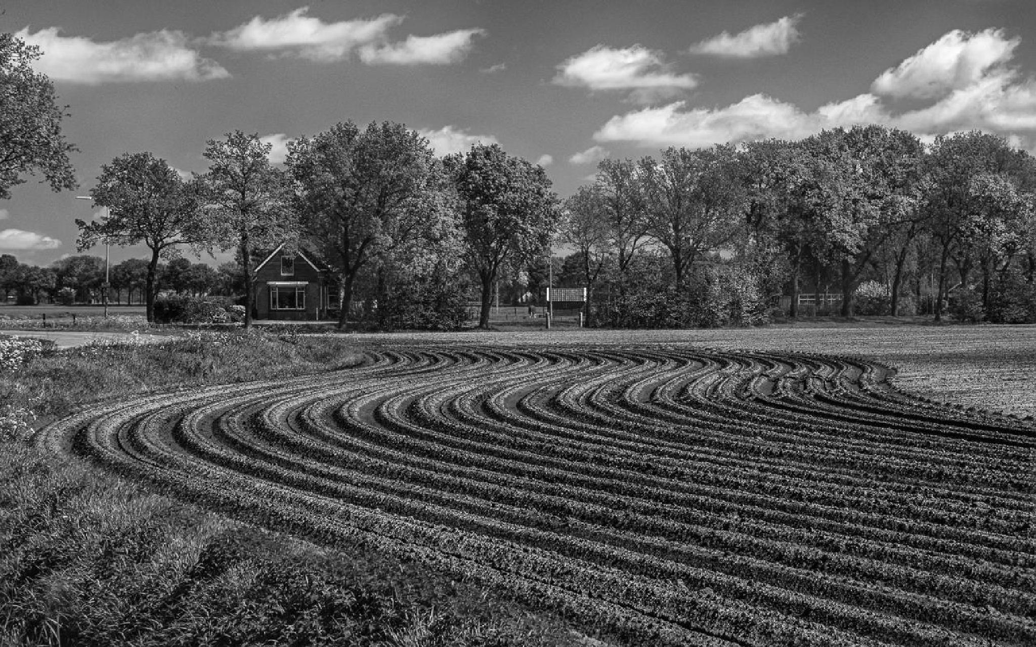 curves of the land by frans.ditucci