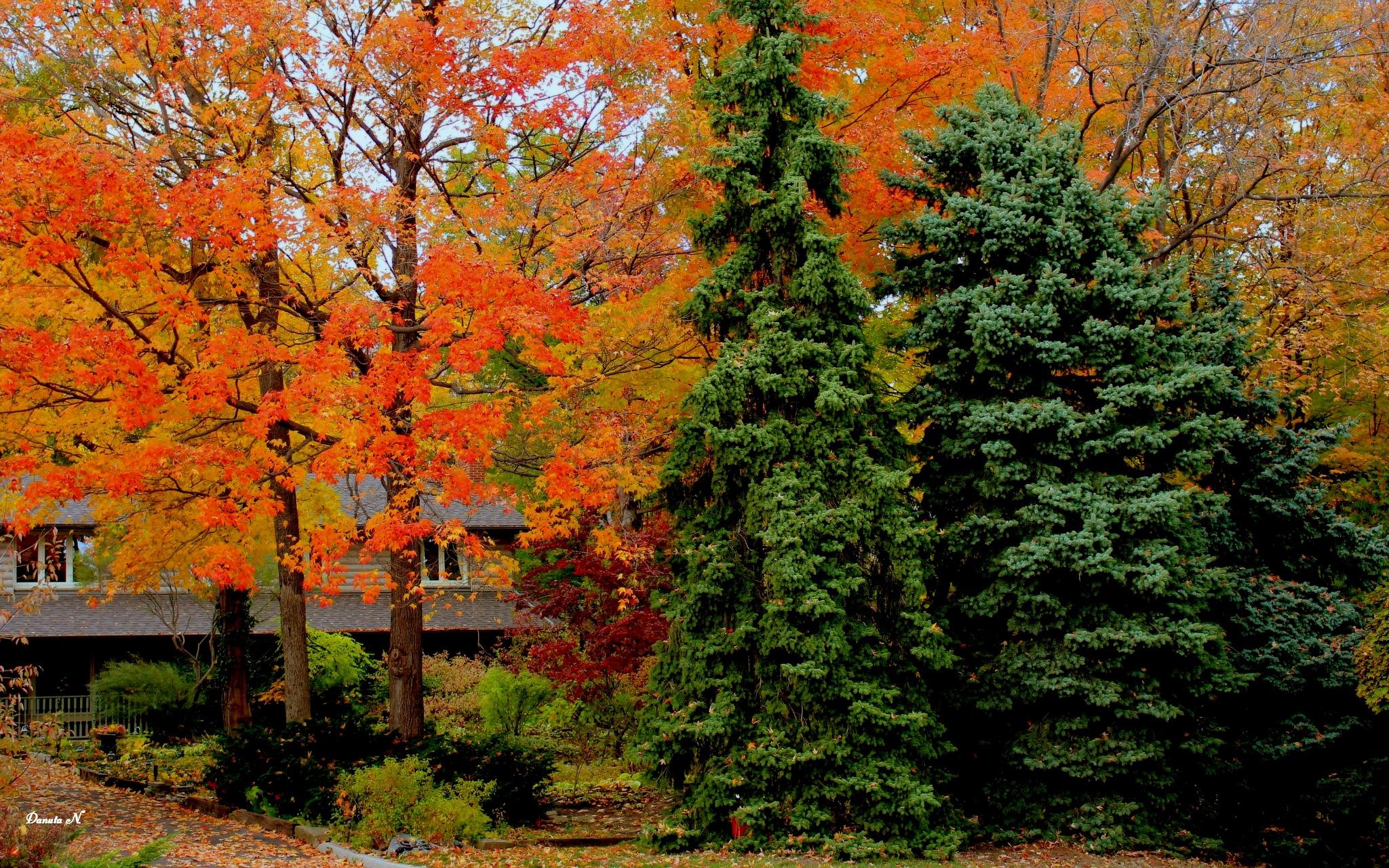 My autumn by b.xoxoxo