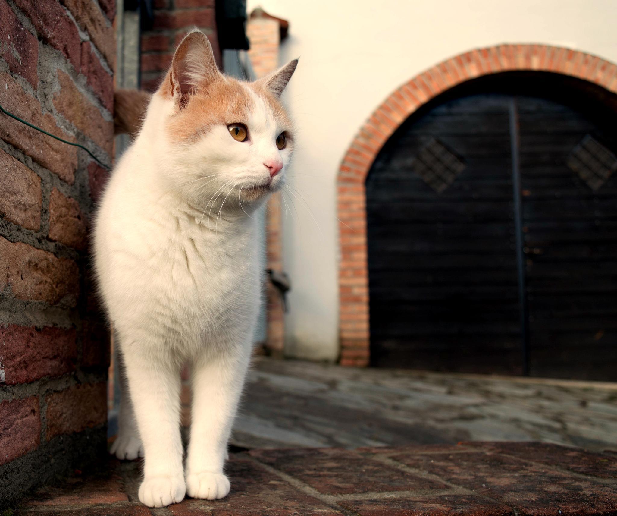 Cat by Deeno