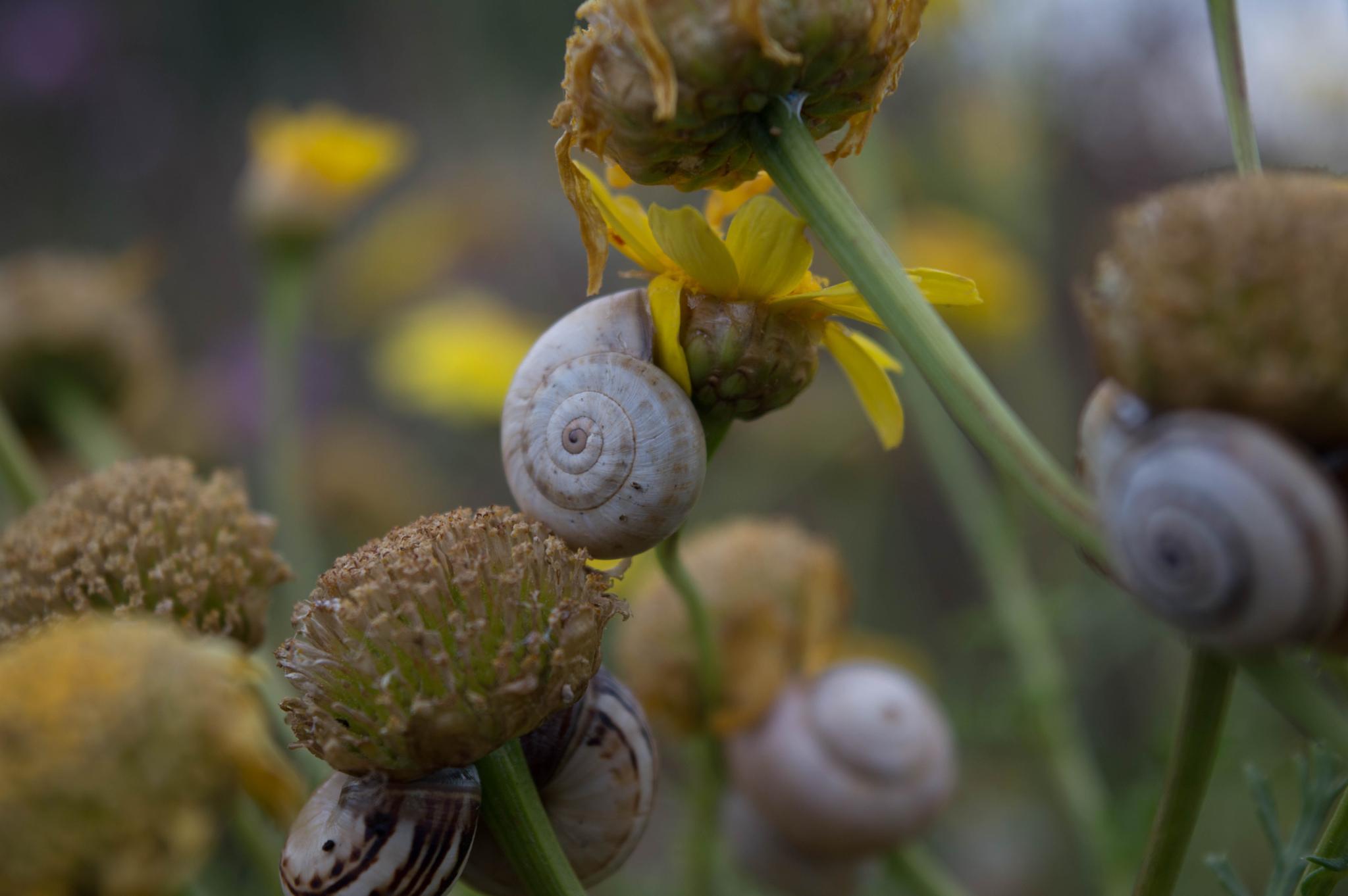 Snail by Deeno