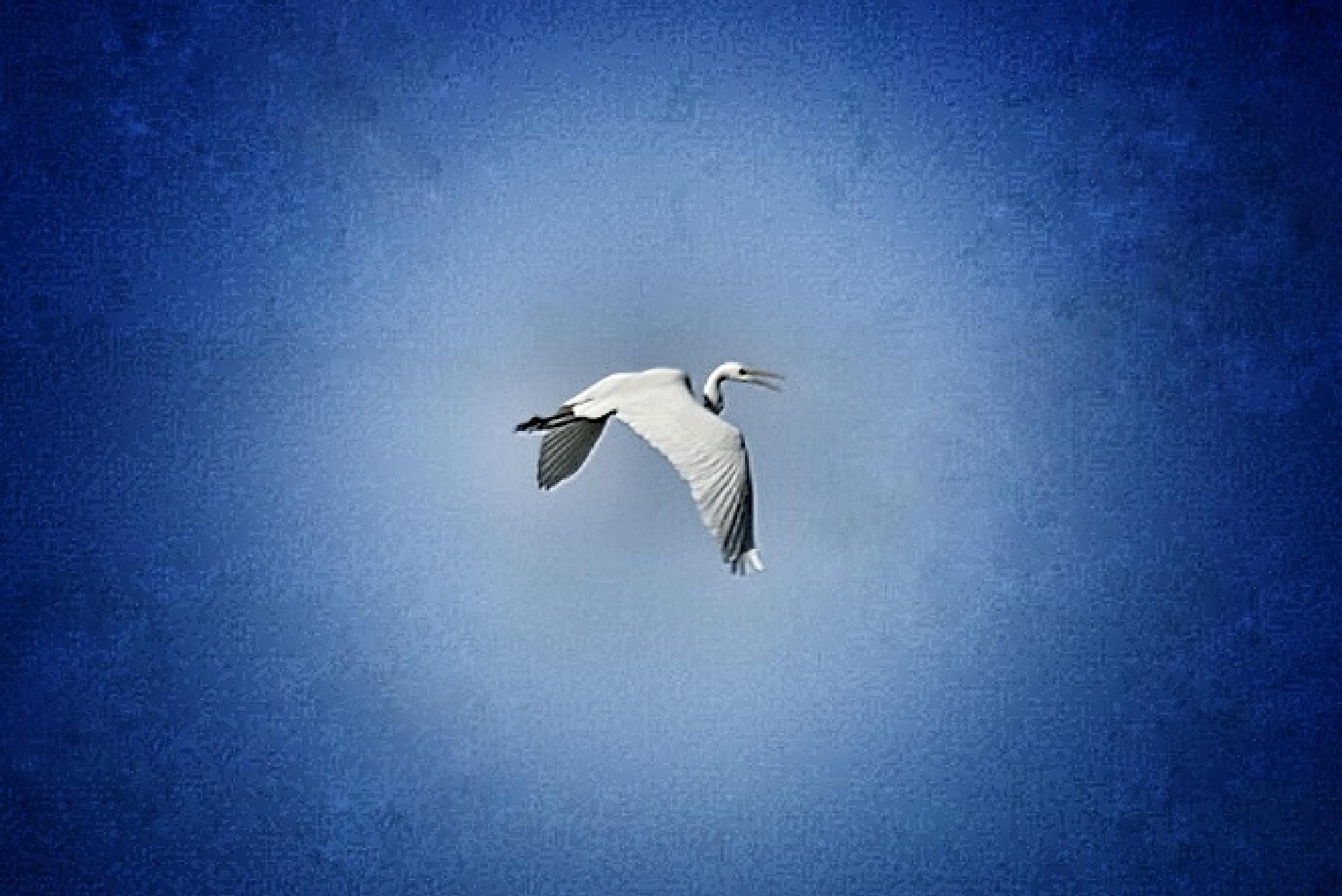 Freedom  by Nick Severino