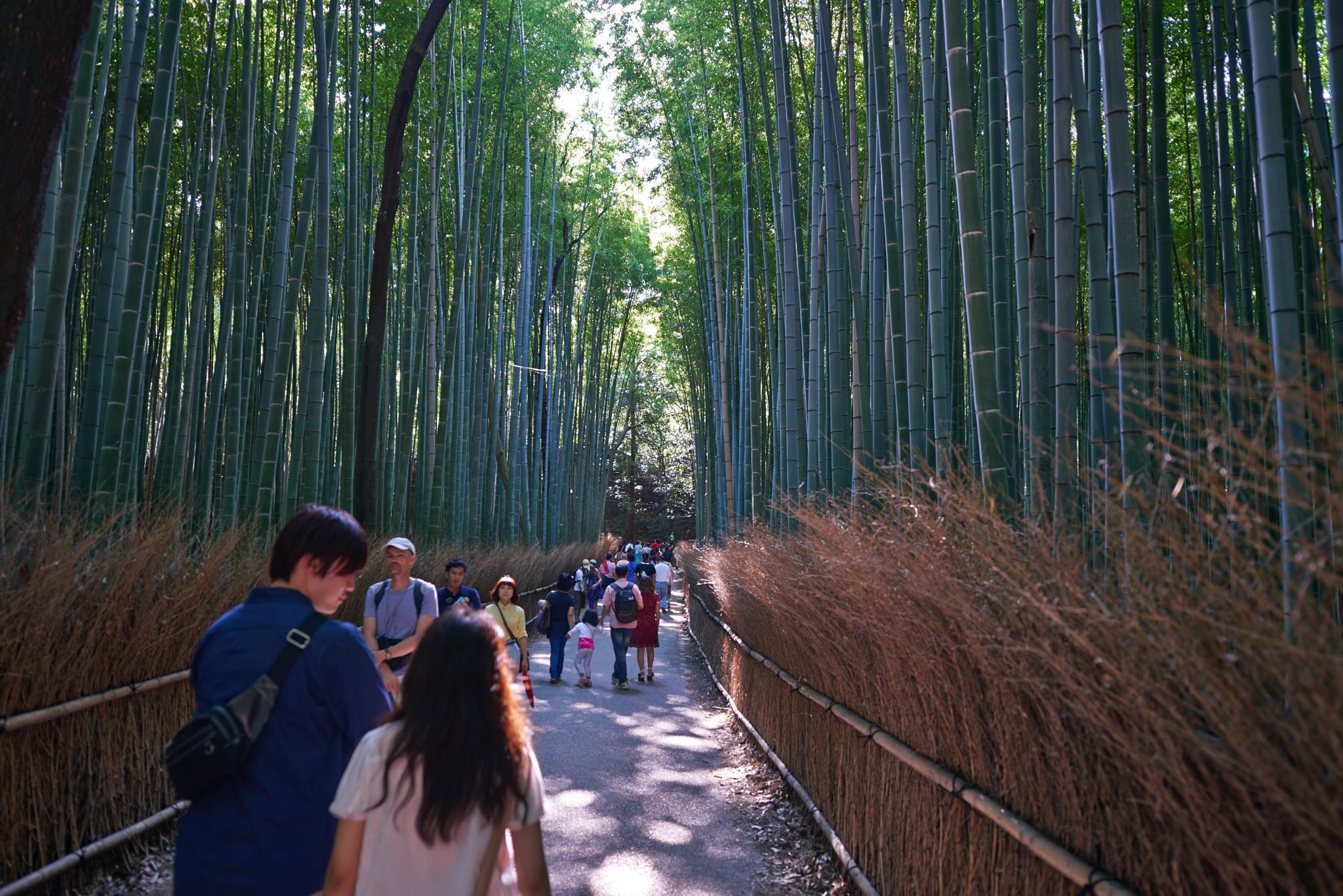 Bamboo walk by Antony Bunn