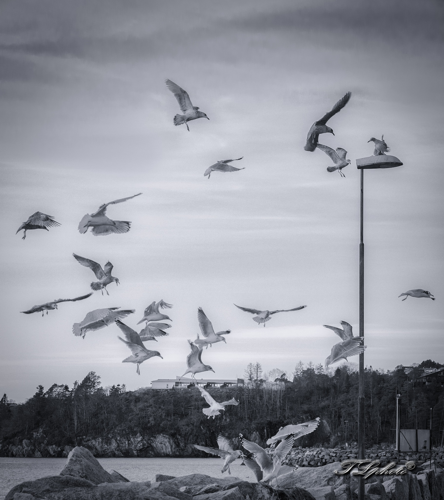 Seagulls by Thore's photo