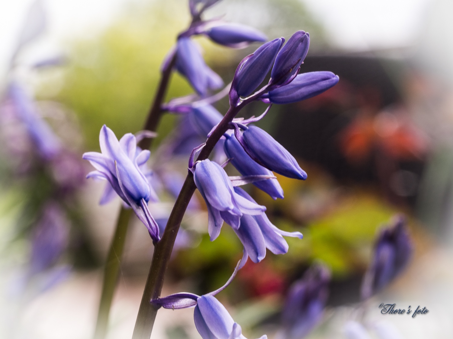 Blue is my color.. by Thore's photo