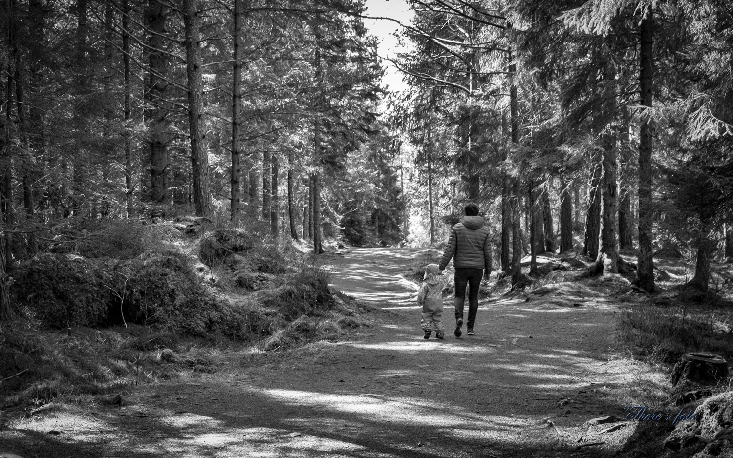 forest hiking by Thore's photo